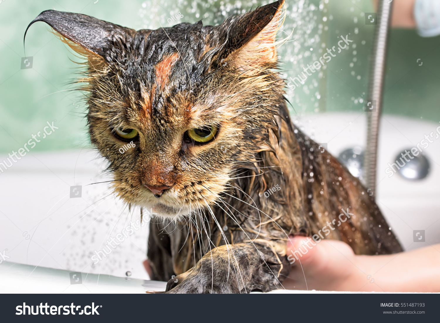 how to give a cat a bath that hates water