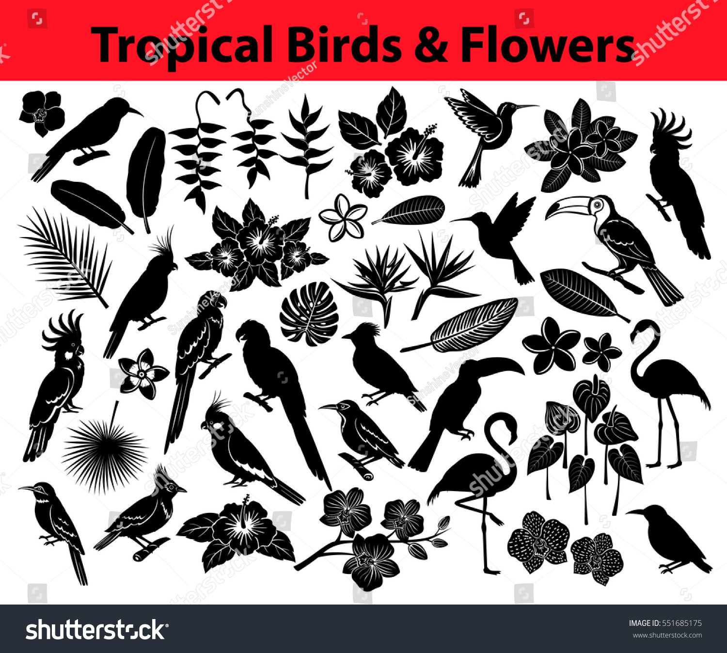 Collection Of Tropical Exotic Birds Parrots Flowers And Some Leaves As Silhouettes In Black