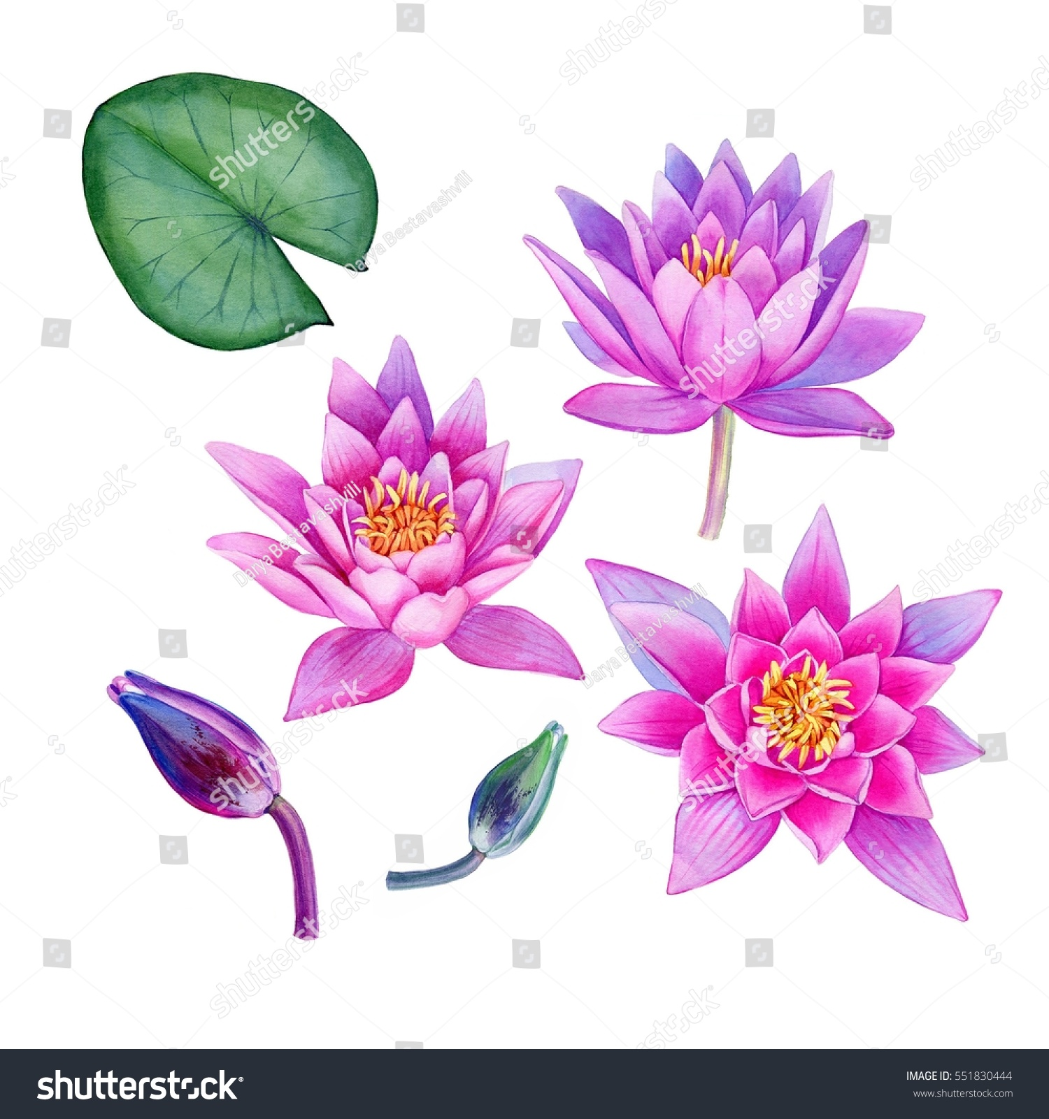 Watercolor Hand Painted Lotus Flowers Can Stock Illustration
