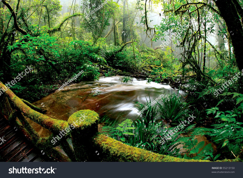 Beautiful Rain Forest At Doi Inthanon National Park, Thailand Stock ...