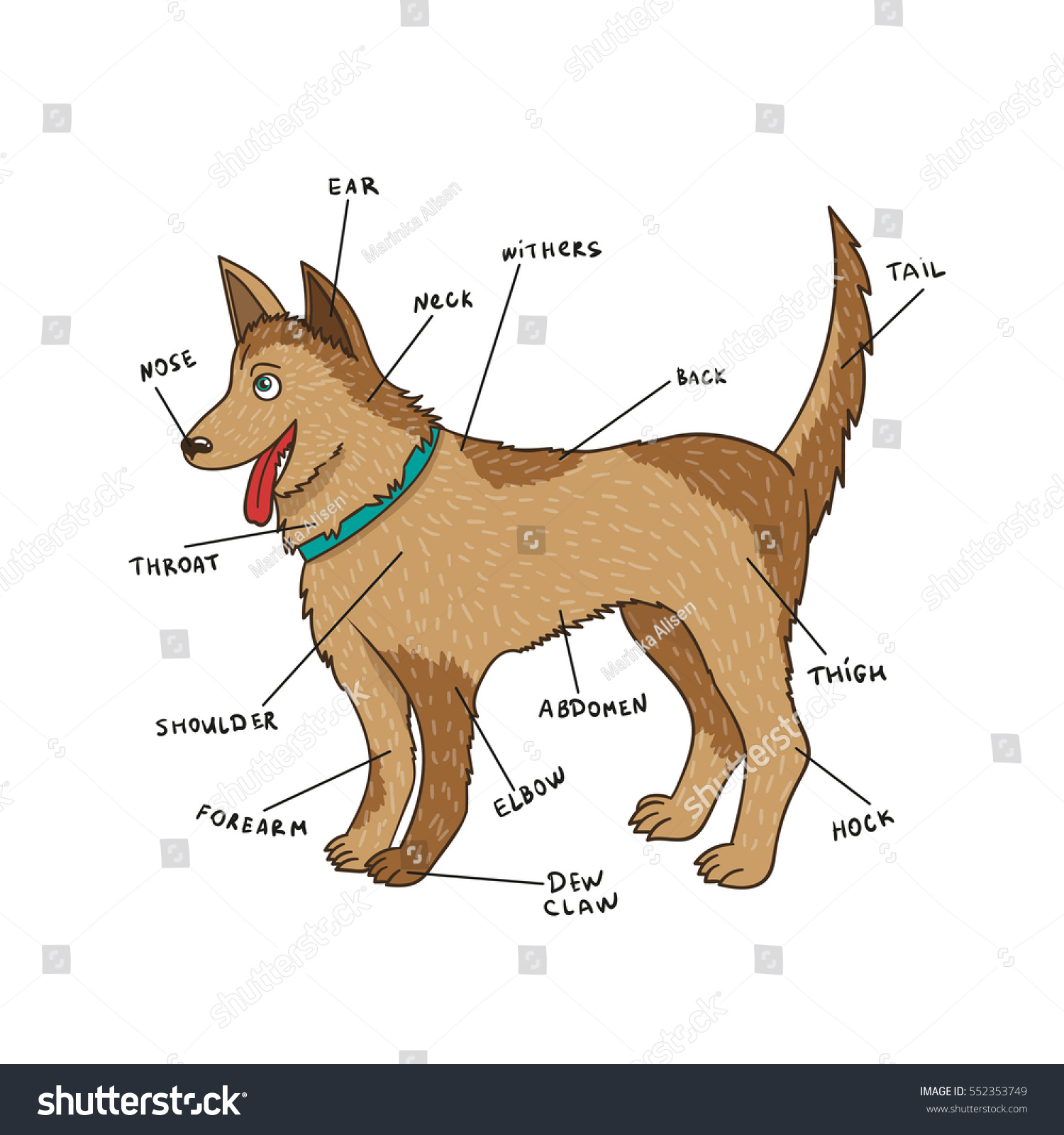 Dog External Anatomy Puppy Parts On Stock Vector Royalty Free