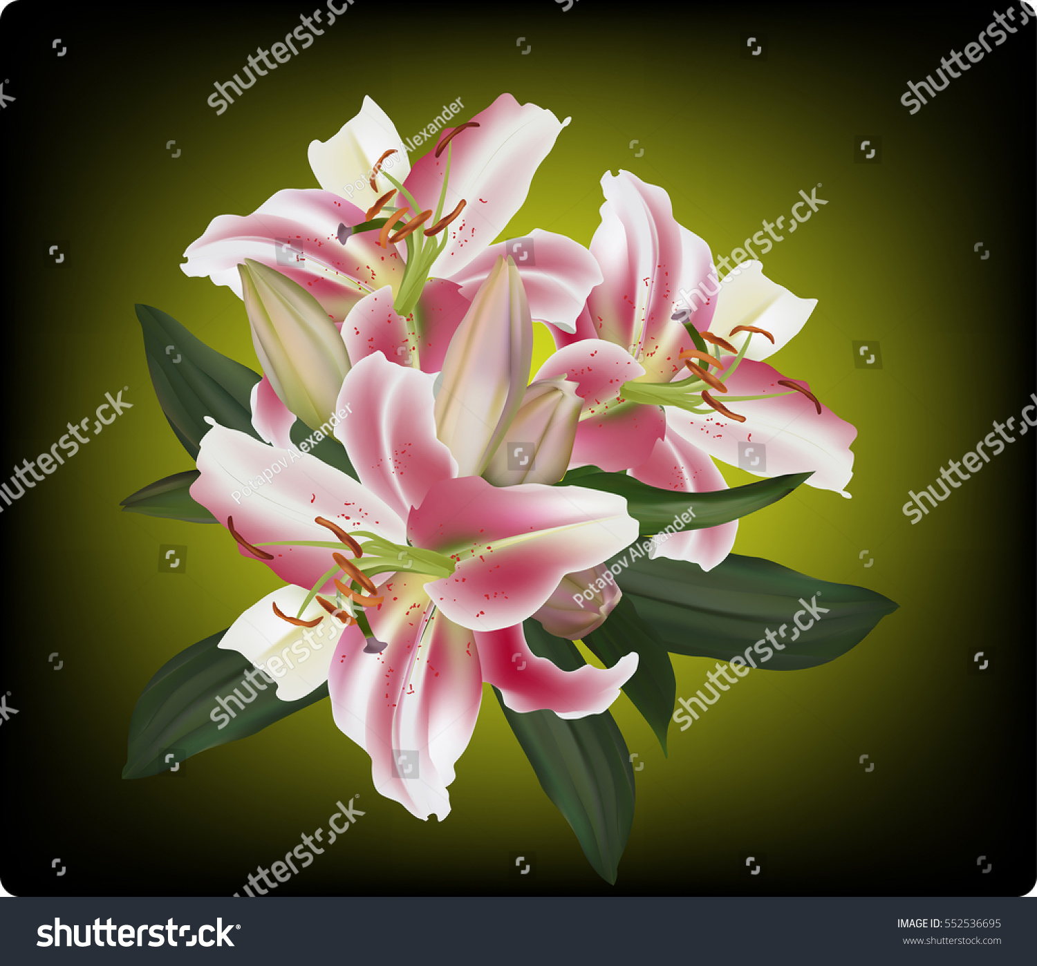 Illustration lily flower on dark background stock vector 552536695 illustration with lily flower on dark background izmirmasajfo