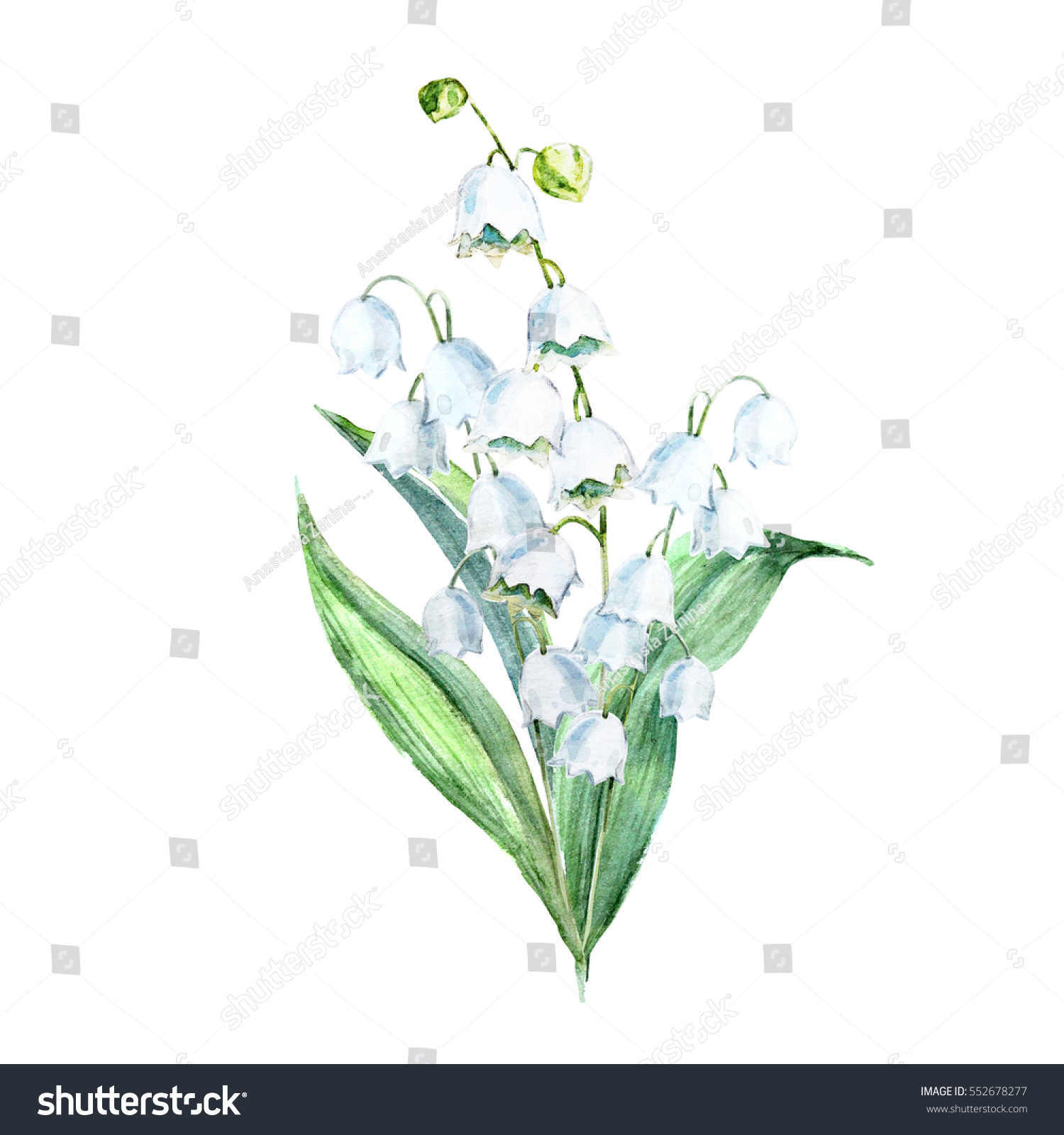 Watercolor illustration flowers lily valley sweet stock illustration watercolor illustration of flowers lily of the valley sweet spring bouquet izmirmasajfo