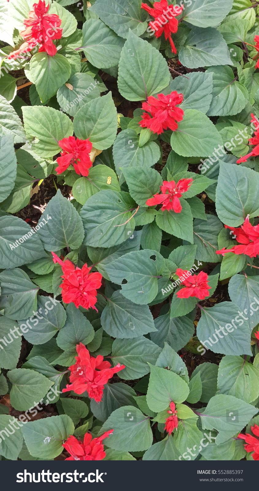 Amazing views of nature beautiful flowers in the garden under the id 552885397 izmirmasajfo