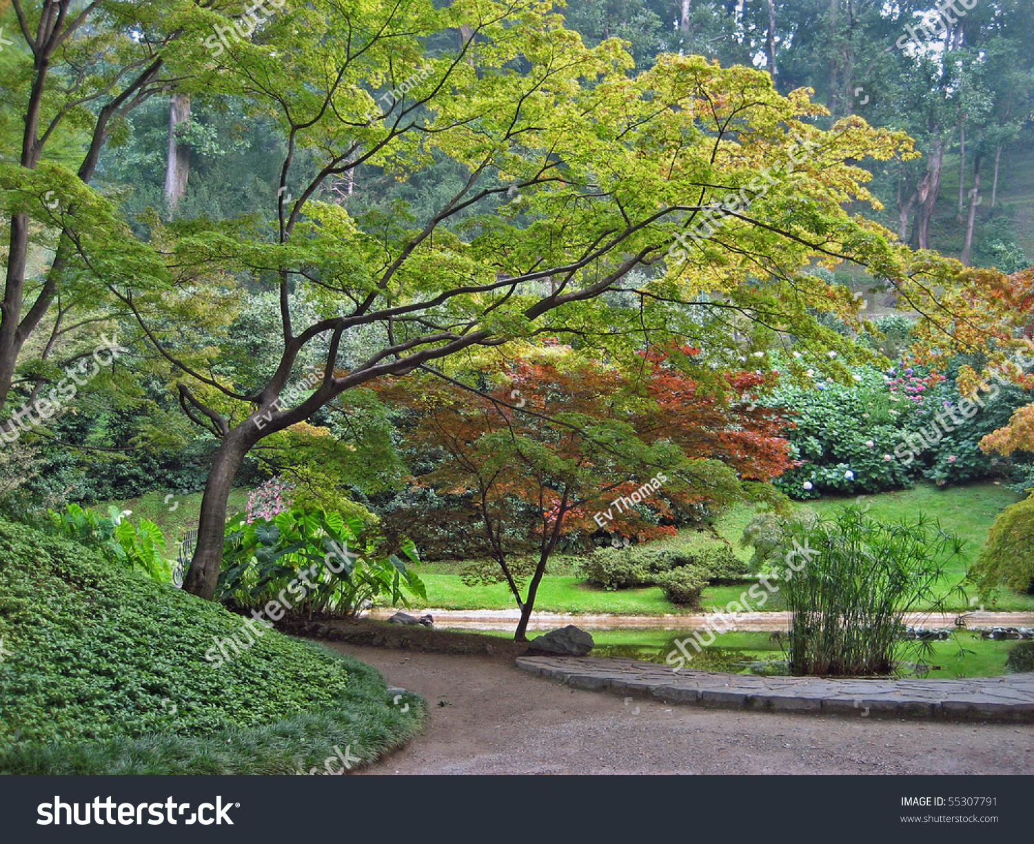 Full HD Nature Wallpaper with Japanese Maple Tree - HD ... |Beautiful Japanese Trees
