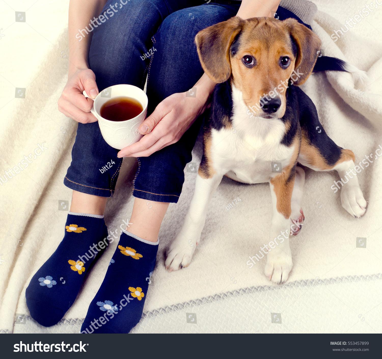 cup of tea dog