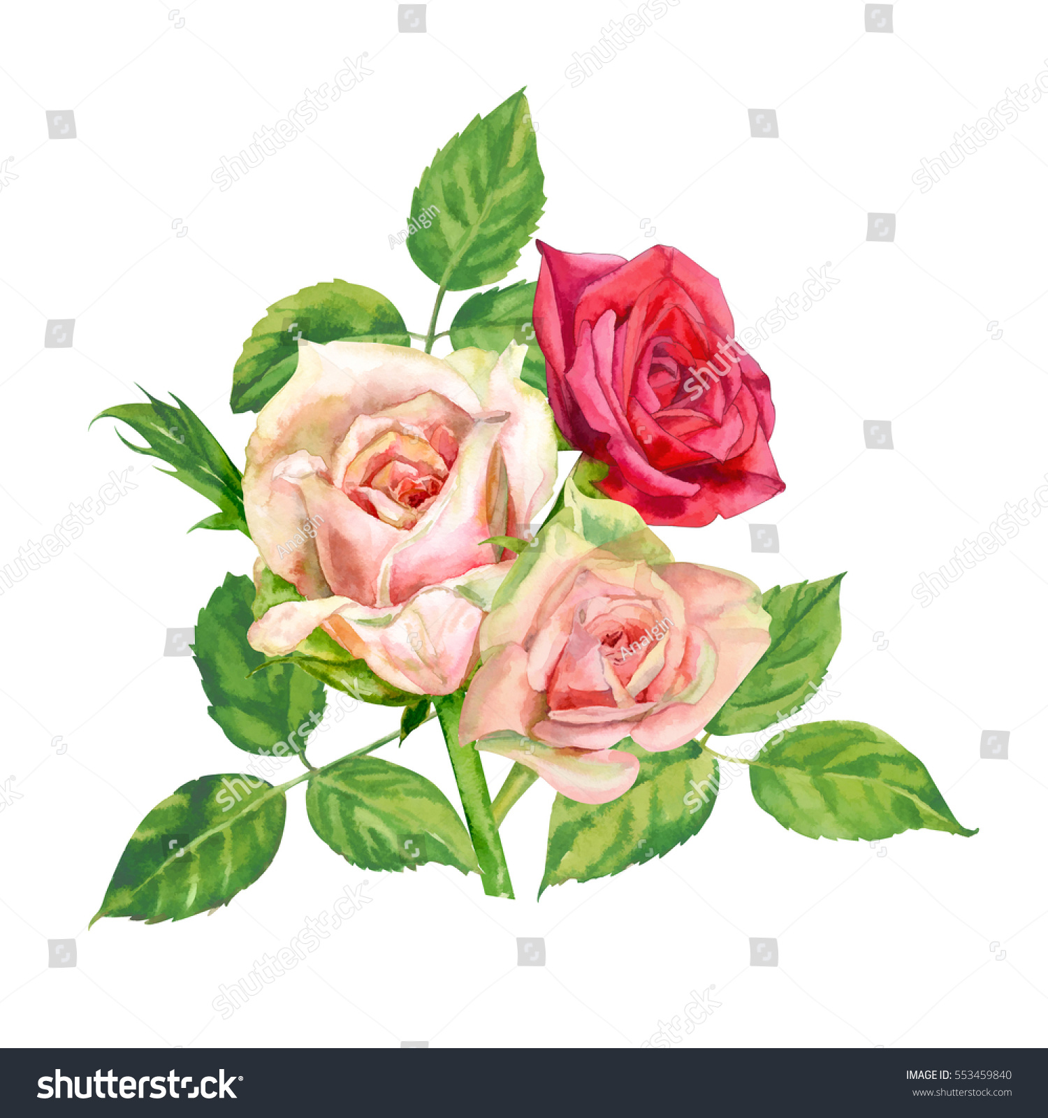 Bouquet Roses Pink Red Flowers Green Stock Illustration 553459840 ...