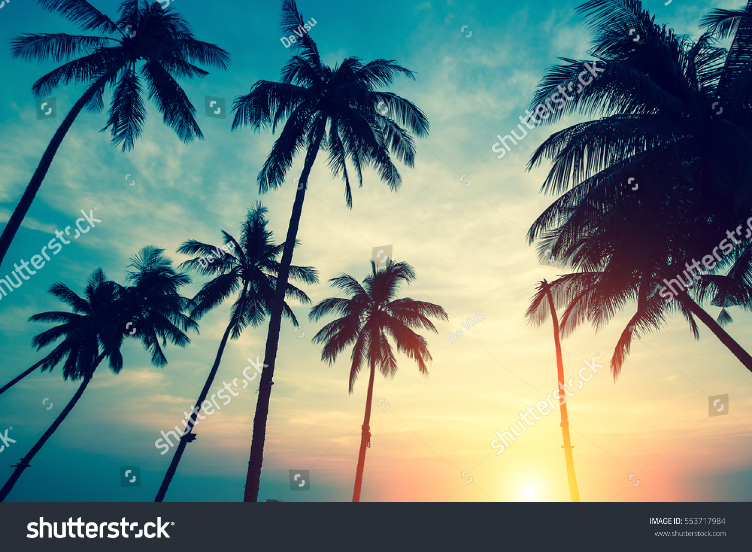 silhouettes palm trees against sky during stock photo 553717984
