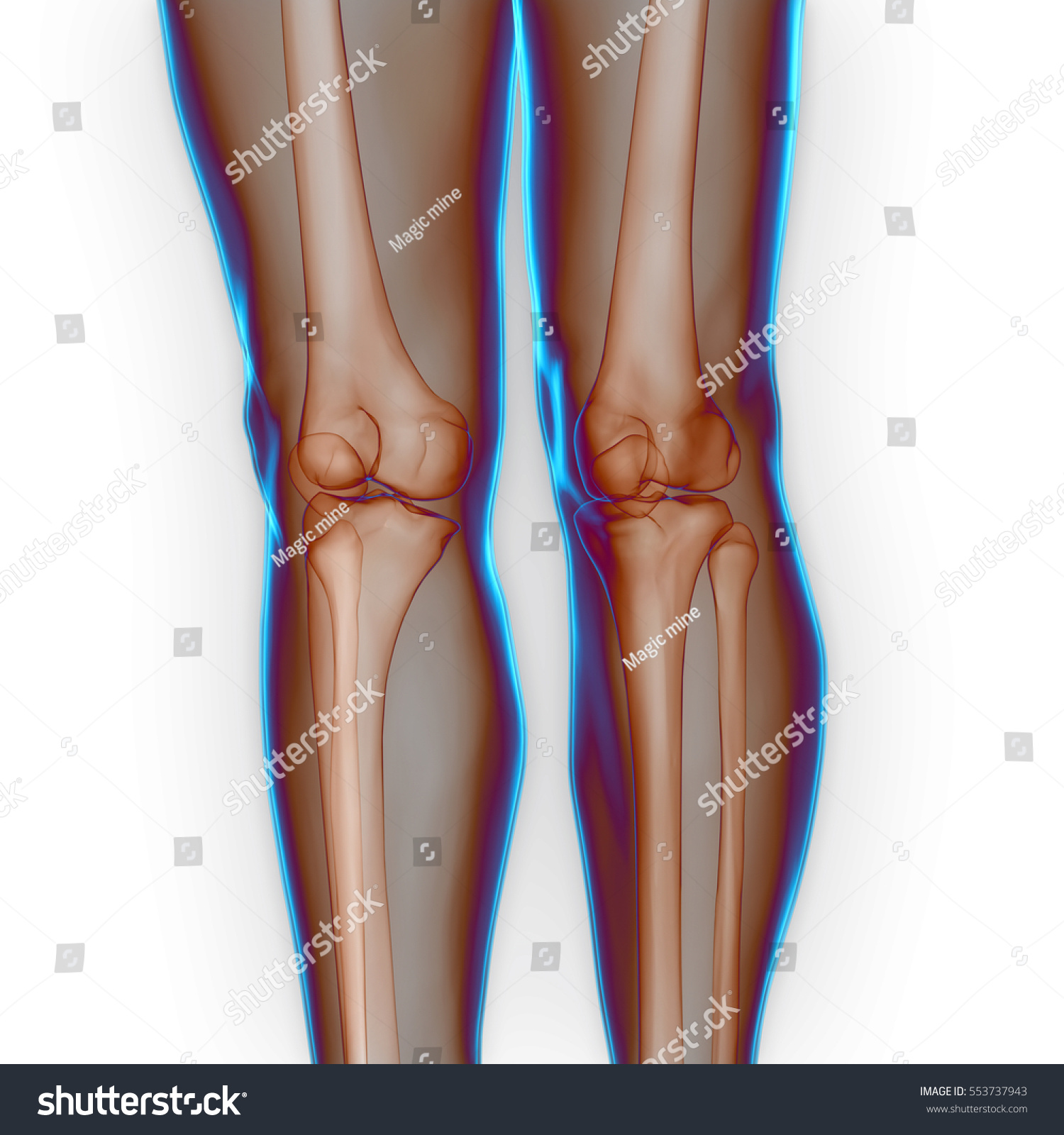 Human Body Bone Joint Pains Anatomy Stock Illustration 553737943 ...