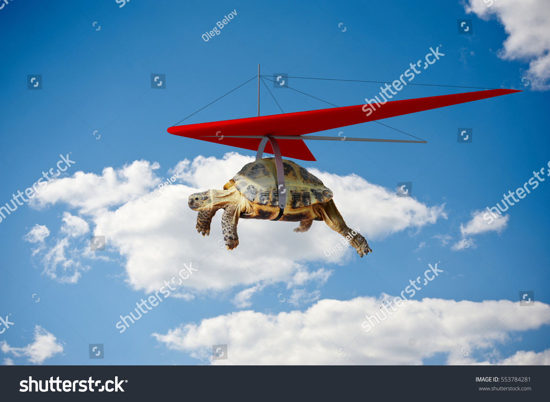 Superb Funny Turtle Flying On Hang Glider