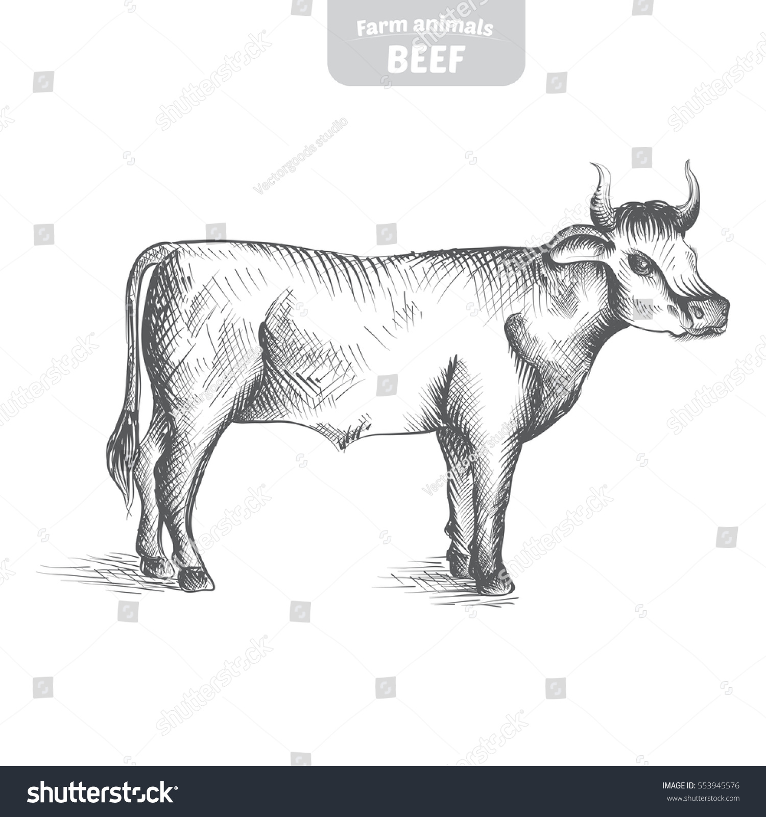 Sketch Of Cow Drawn By Hand Livestock Cattle Animal Grazing