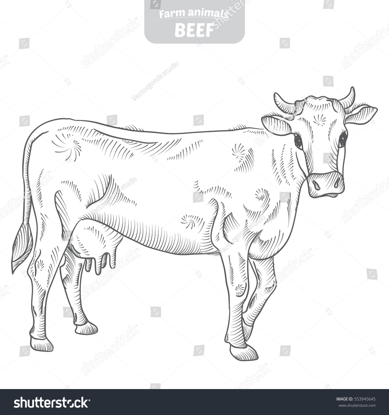 Cow And Farm In Graphic Style From Hand Drawing Image