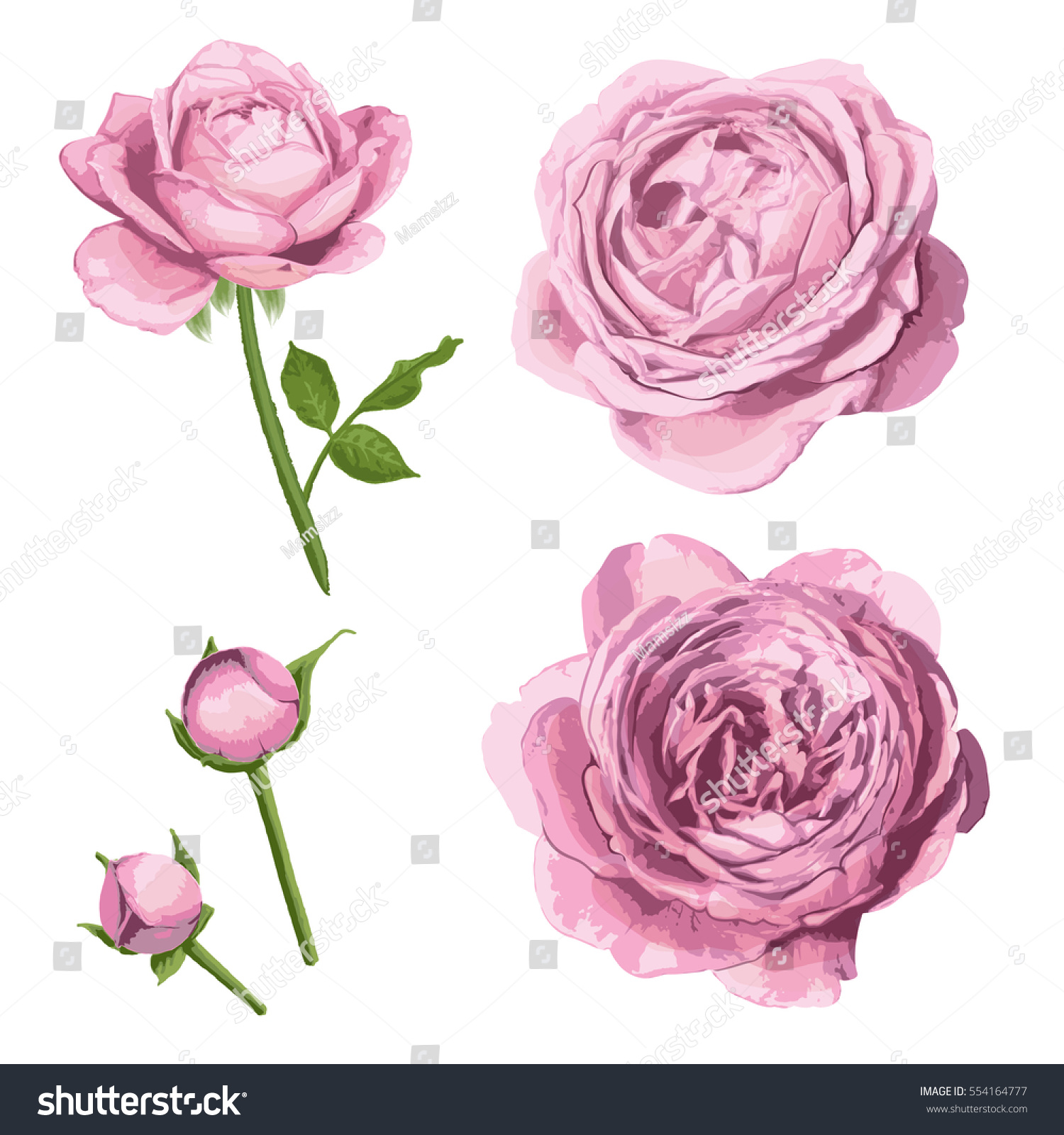 Rose Flowers Pink Color Stock Vector Royalty Free 554164777