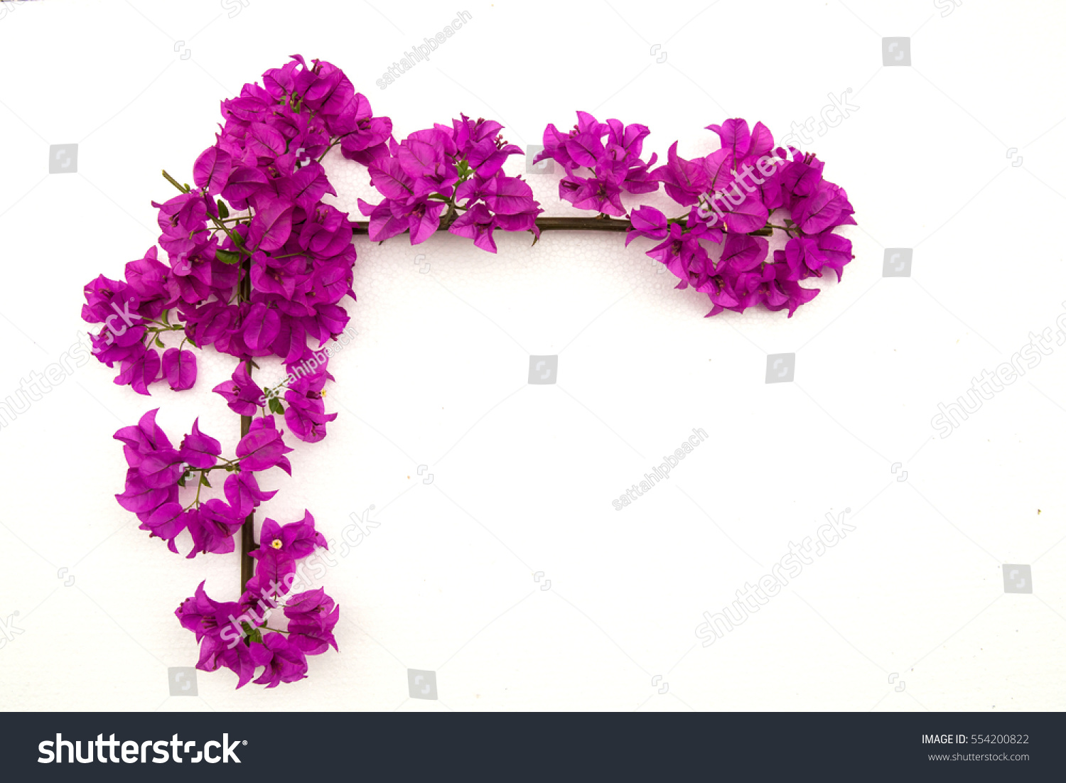 Bougainvilleas Paper Flower Frame On White Stock Photo Edit Now