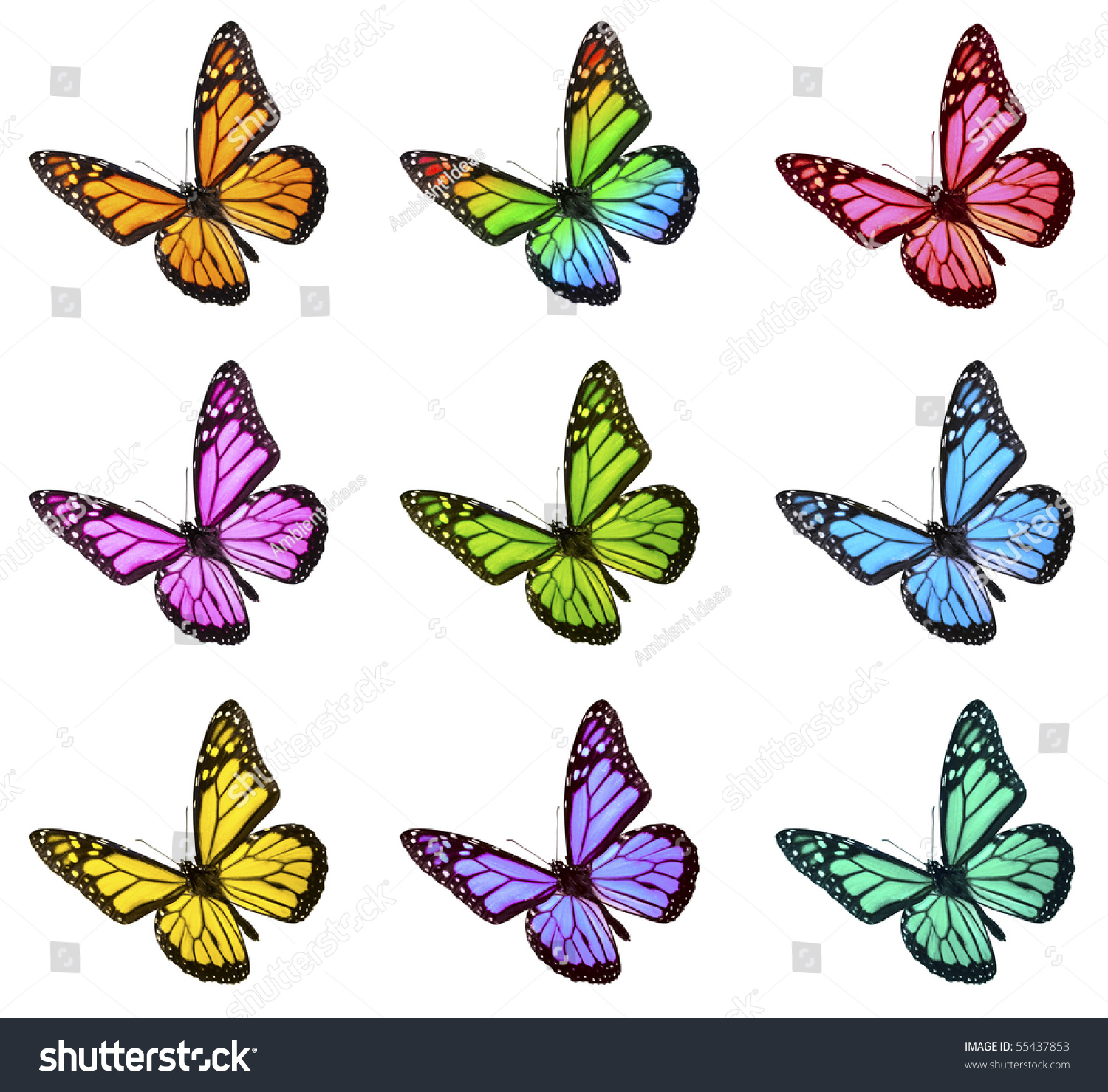 Monarch Butterfly Various Colors Stock Photo 55437853 ...