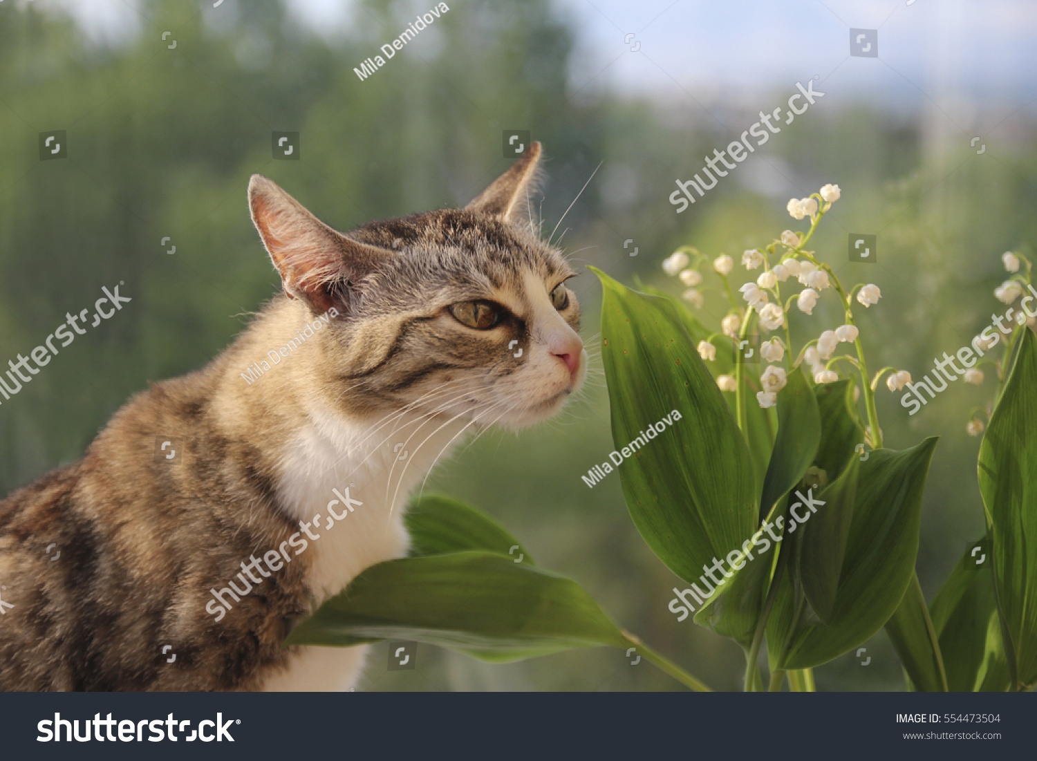 Cat Sniffing Flower Lily Valley Stock Photo Edit Now 554473504