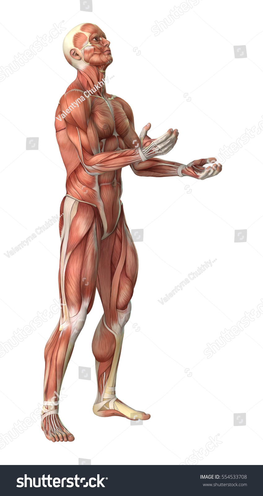 3 D Rendering Male Anatomy Figure Muscles Stock Illustration
