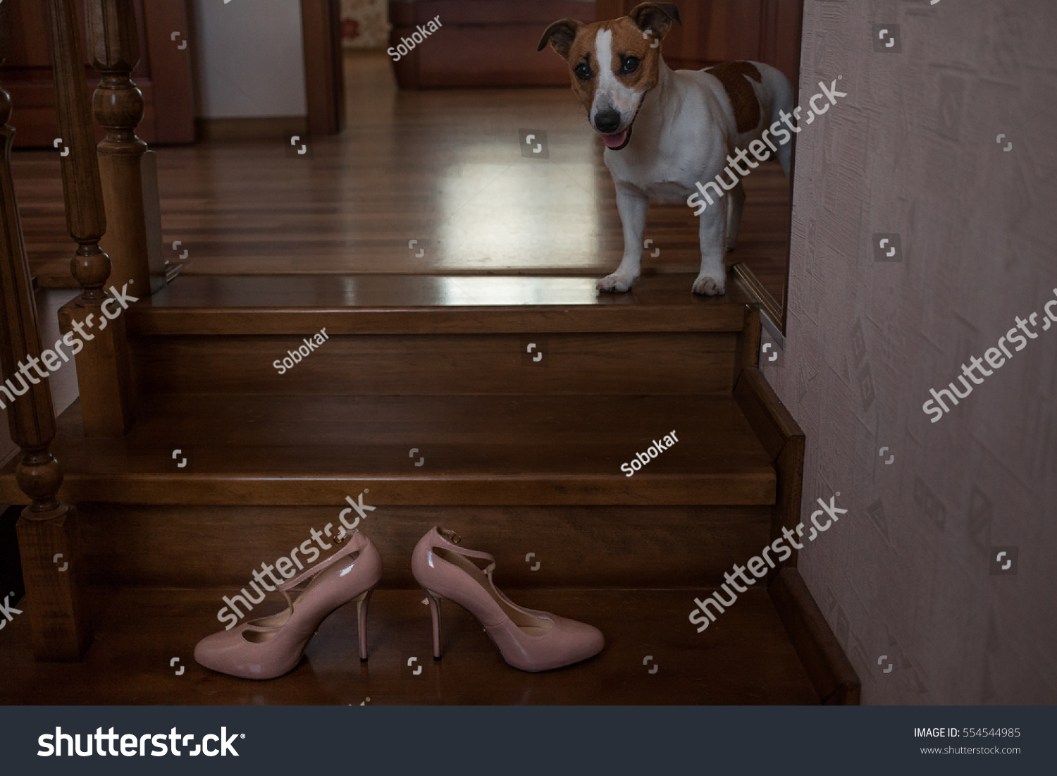 Cute Little Dog Sitting Near Bride Stock Photo 554544985 ...