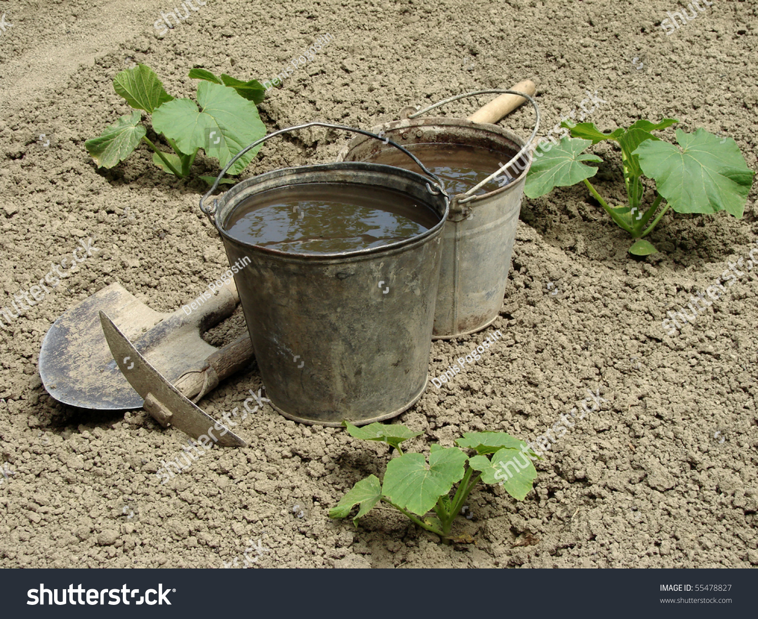 Two Buckets Water Gardening Tools On Stock Photo (Royalty Free ...