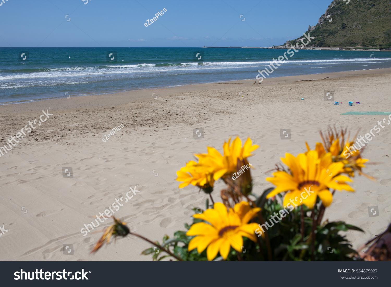 Yellow Gazania Flowers May Terracina Beach Stock Photo Edit Now