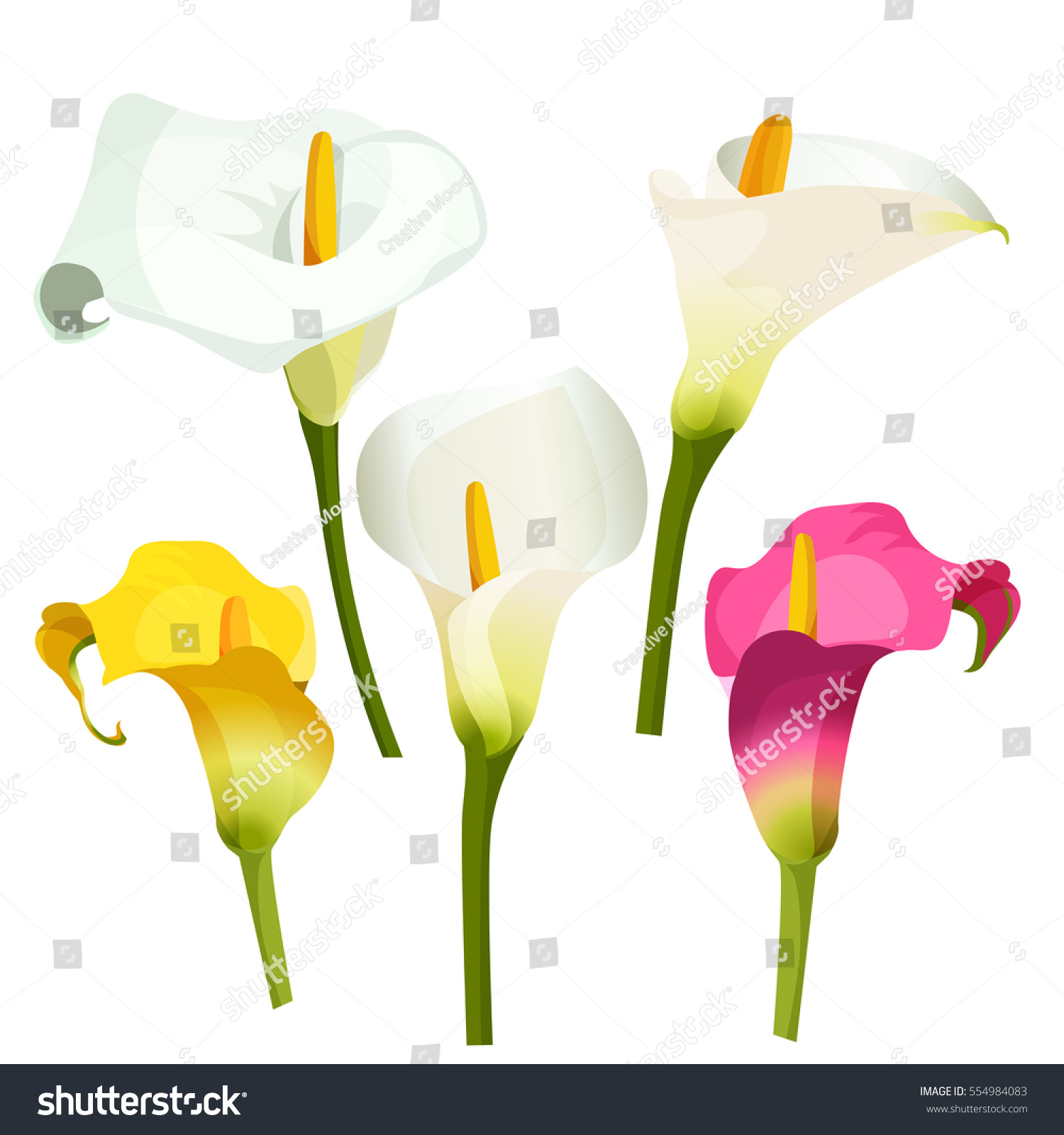 collection coloured arum lilies on white stock vector (royalty free