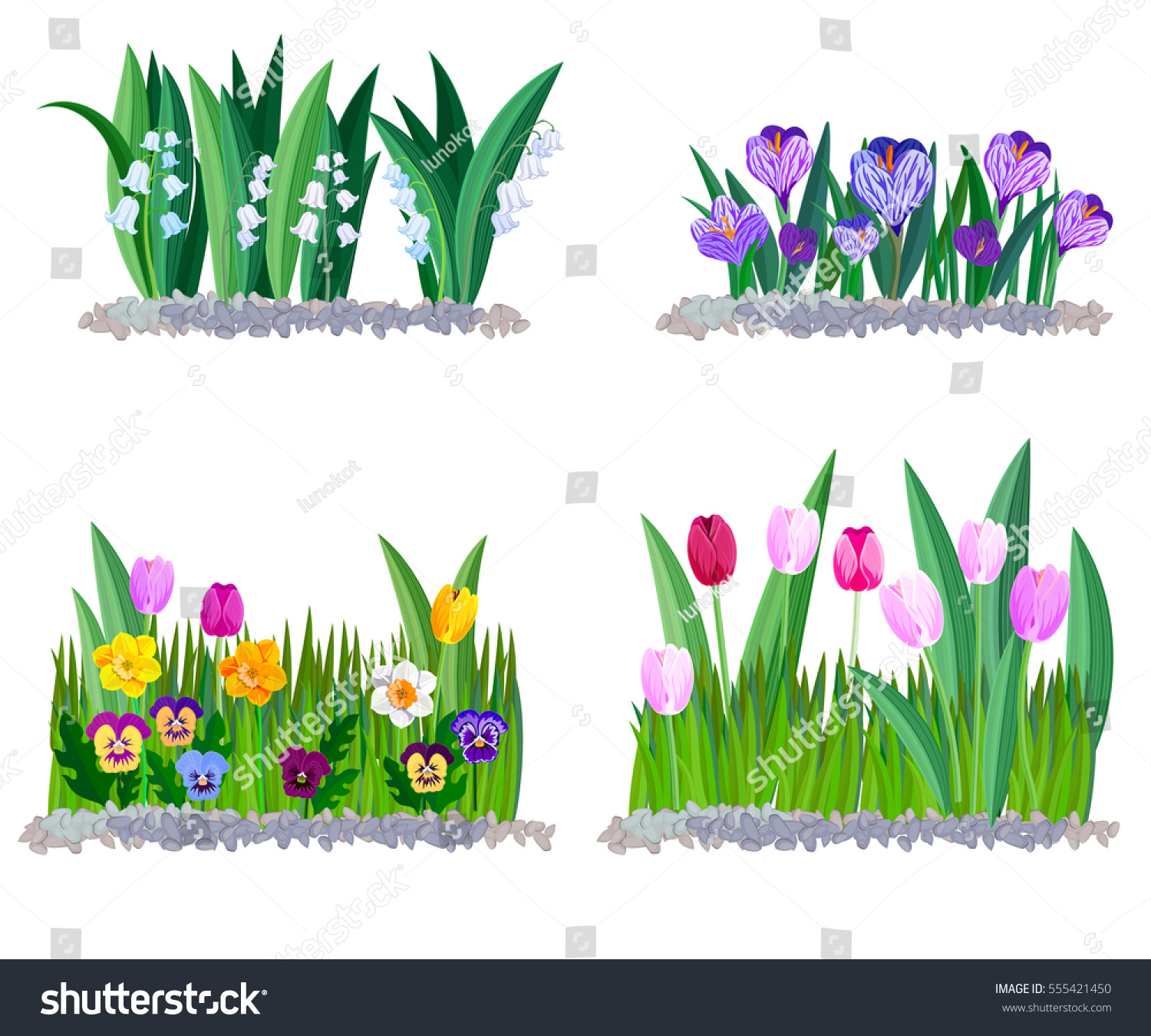 Spring Flowers Lily Valley Crocus Tulips Stock Vector Royalty Free