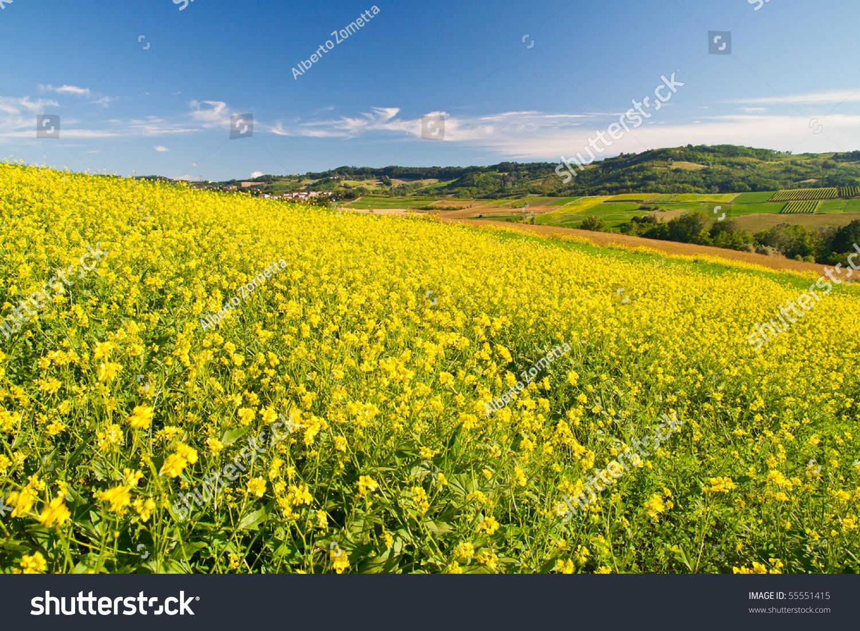 Landscaping A Sunny Hillside : Sunny hillside landscape stock photo shutterstock