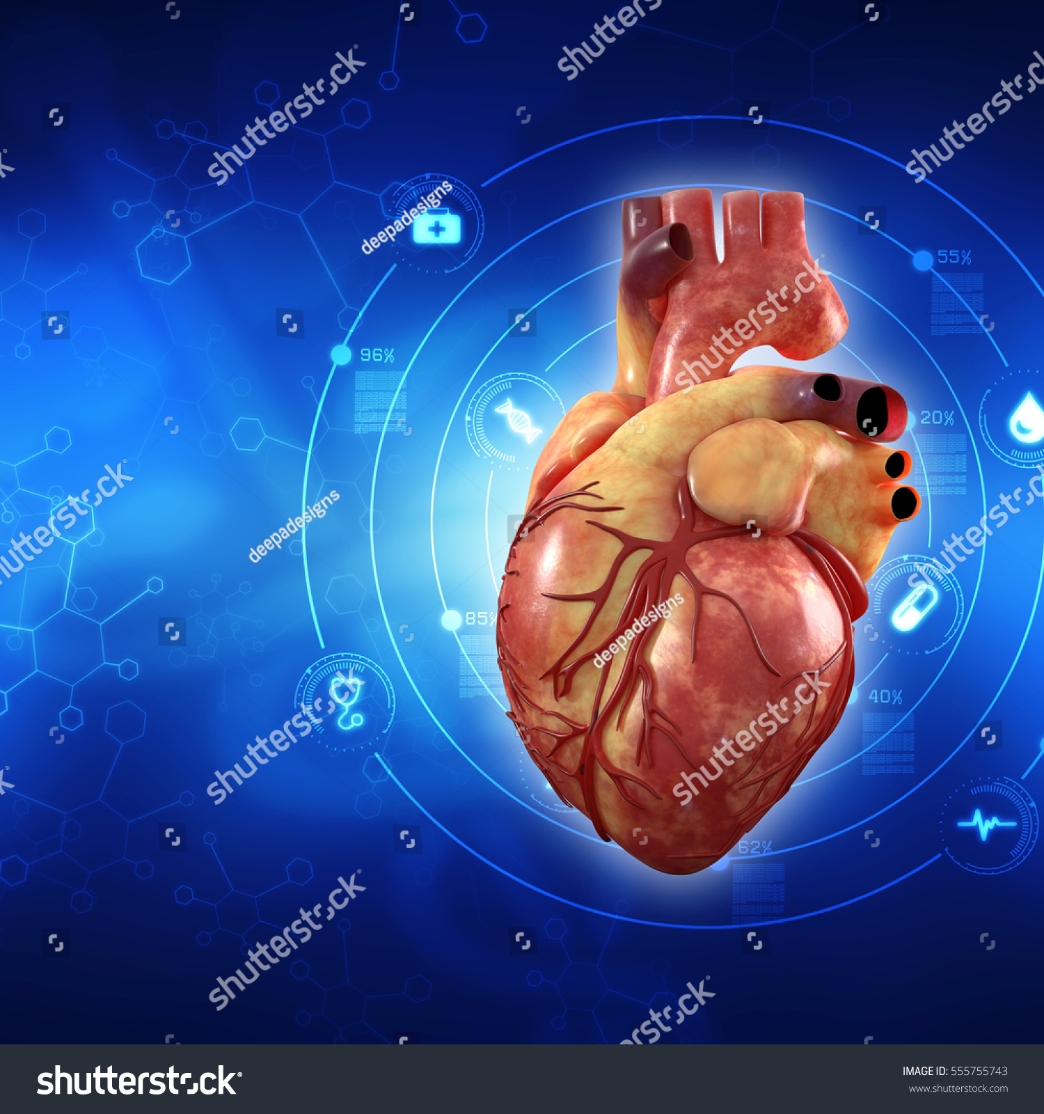 3 D Anatomy Human Heart Stock Illustration 555755743 - Shutterstock