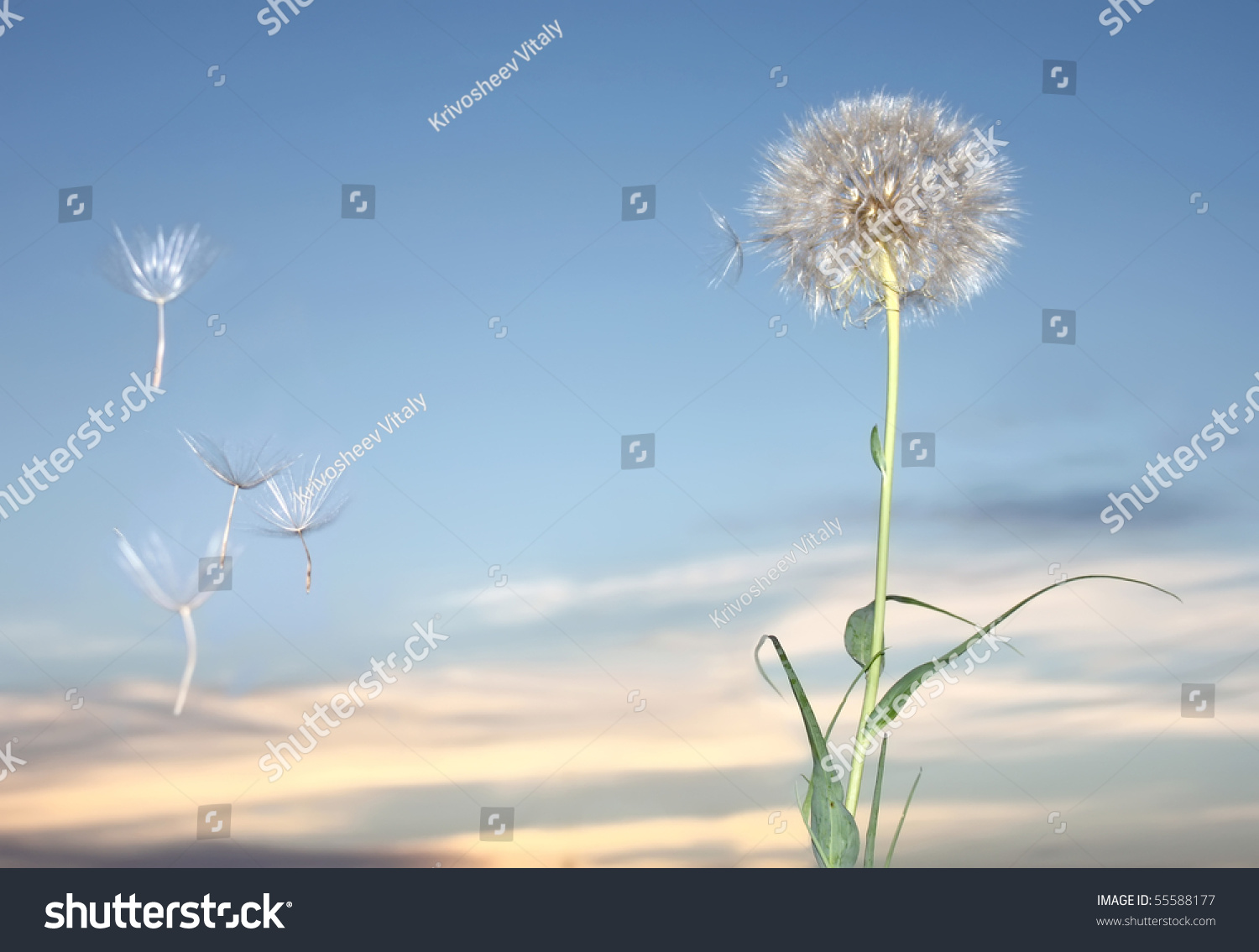 how to draw a dandelion blowing in the wind