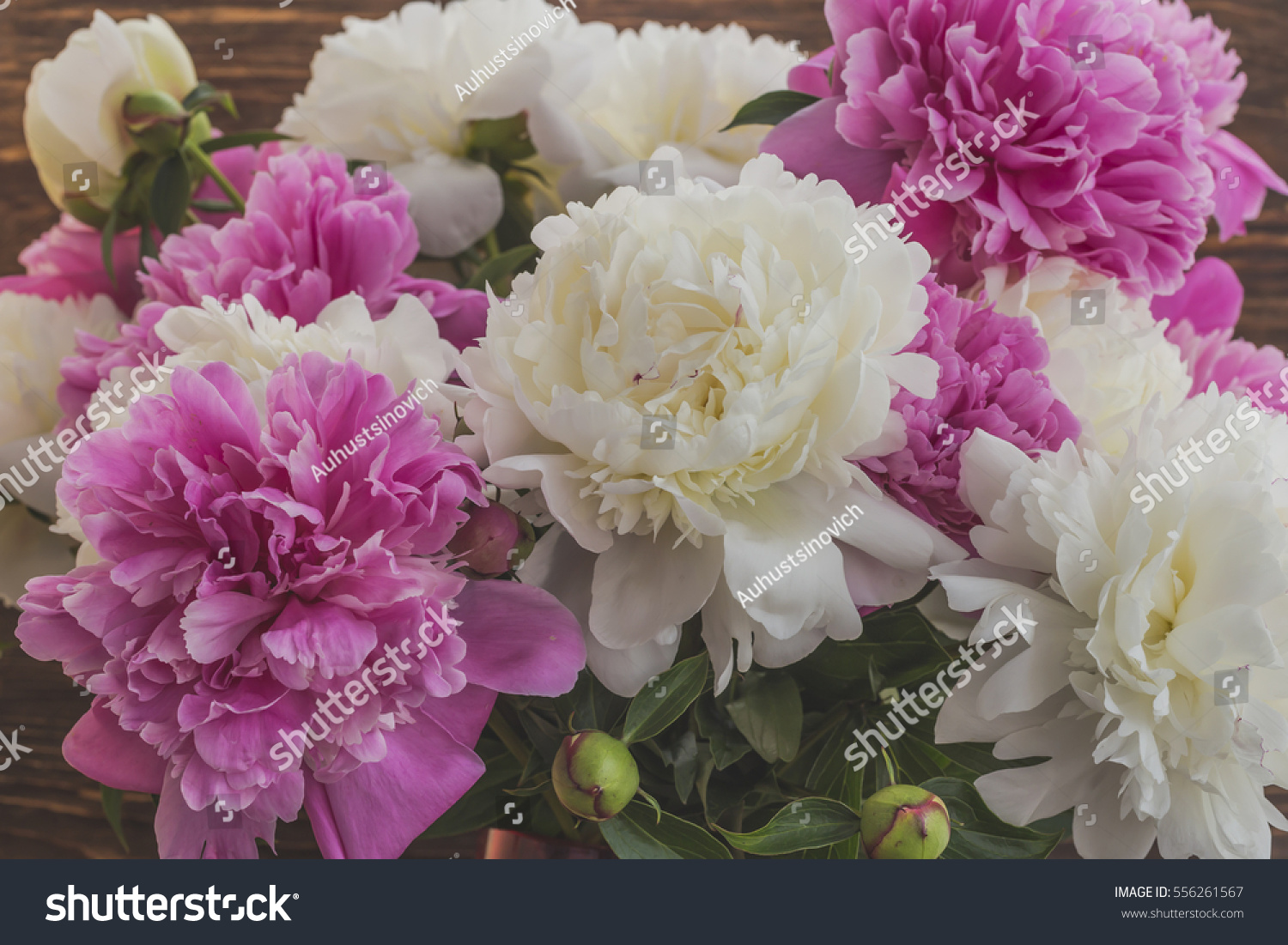 Royalty free bouquet of beautiful flowers of peonies 556261567 bouquet of beautiful flowers of peonies 556261567 izmirmasajfo