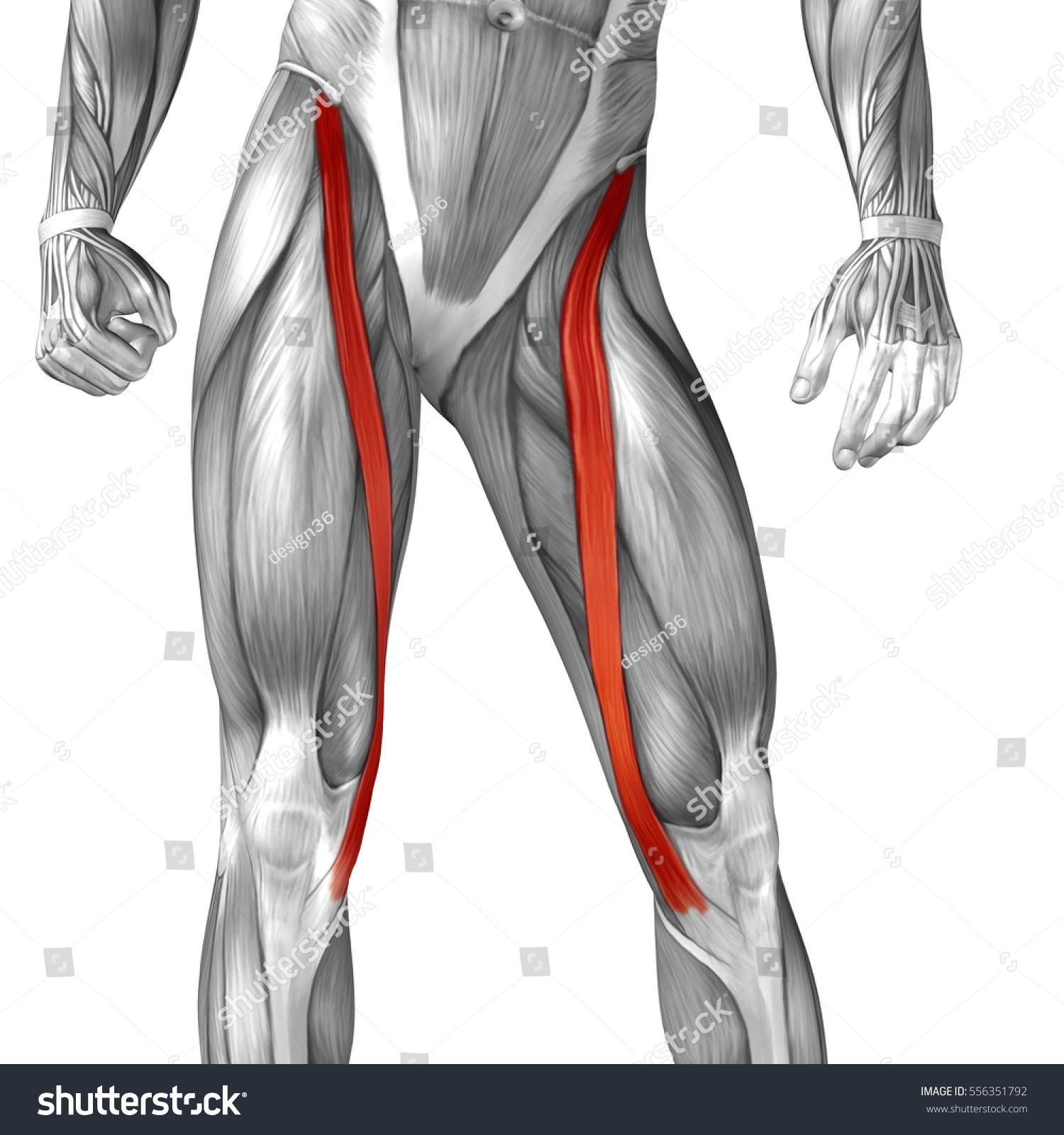 Concept Conceptual 3 D Illustration Human Upper Stock Illustration