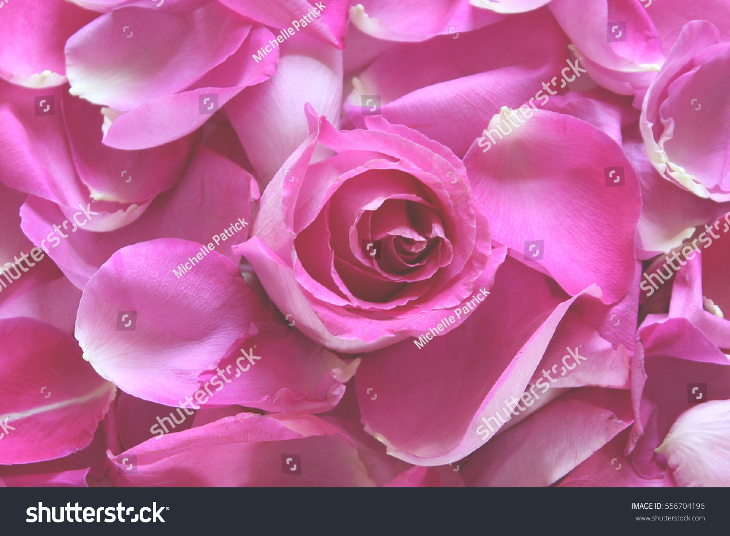 Pink rose petals and blossom square background ez canvas mightylinksfo
