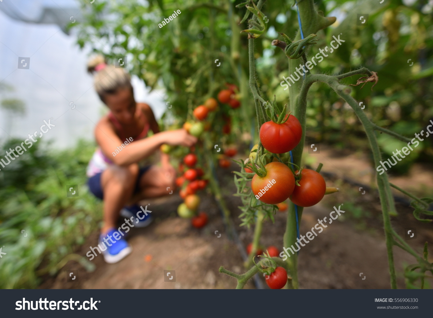 Young Smiling Woman Picking Fresh Vegetables Stock Photo (Edit Now ...