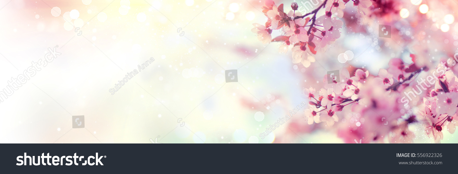 Spring border or background art with pink blossom. Beautiful nature scene with blooming tree and sun flare. Easter Sunny day. Spring flowers. Beautiful Orchard Abstract blurred background. Springtime #556922326