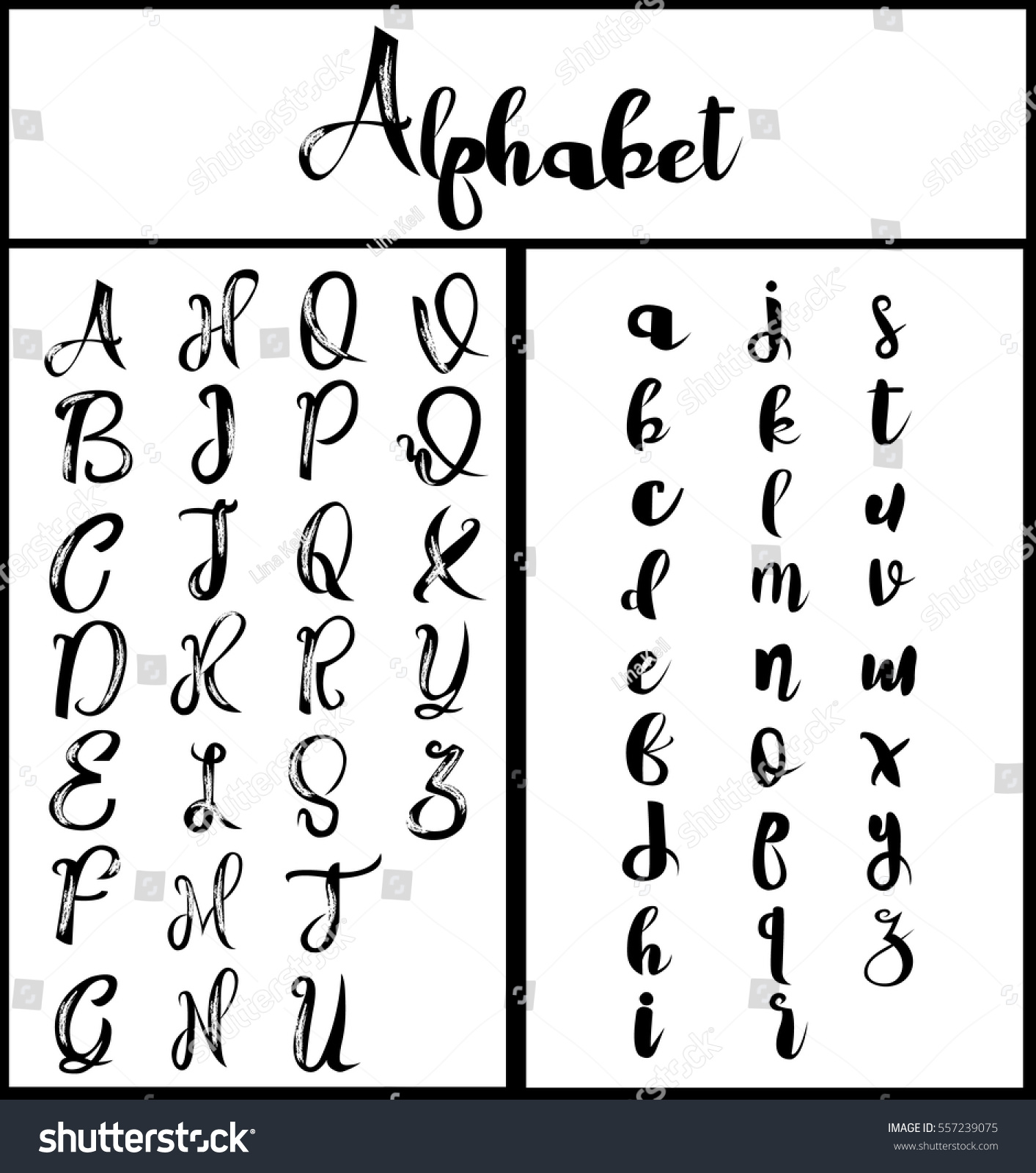 Alphabet calligraphy lettering vector stock