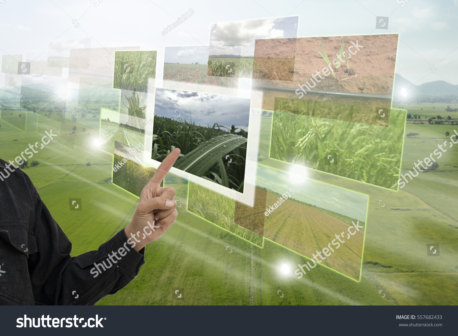 Internet of things(agriculture concept),smart farming,industrial agriculture.Farmer point hand to use augmented reality technology to control ,monitor and management in the farm #557682433