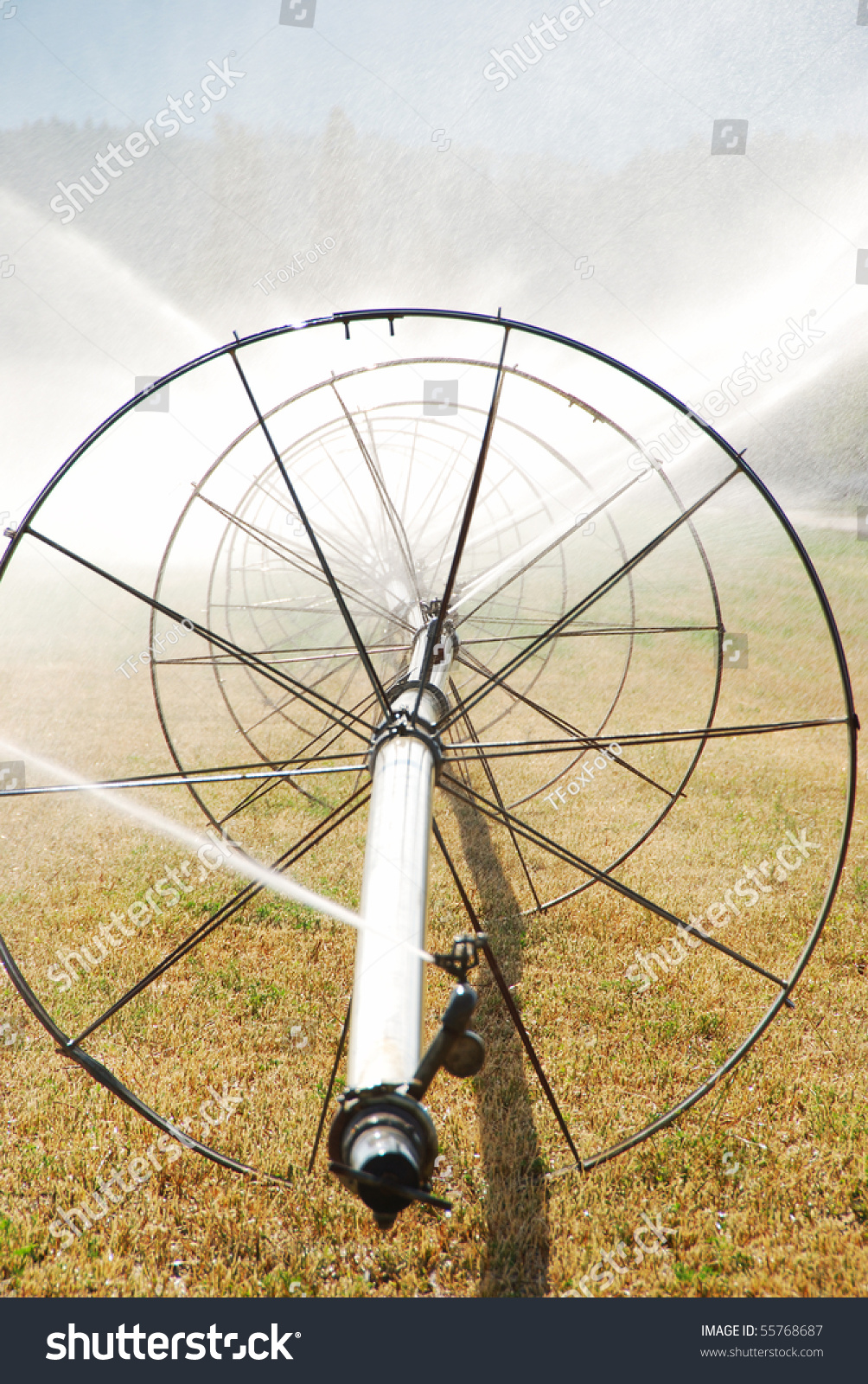 Wheel Irrigation Of A Alfalfa A Field In The Fertile Garden Valley Area Of  Roseburg Oregon