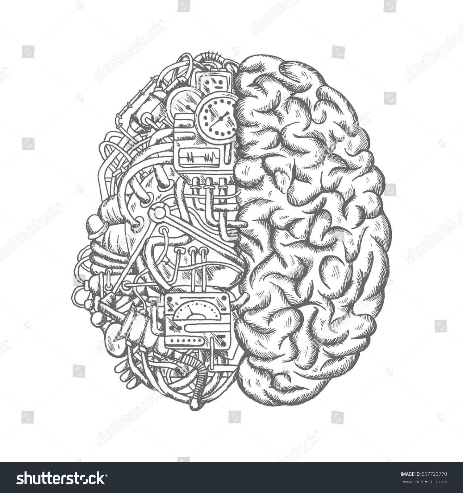 Human Internal Organ Images Stock Photos amp Vectors