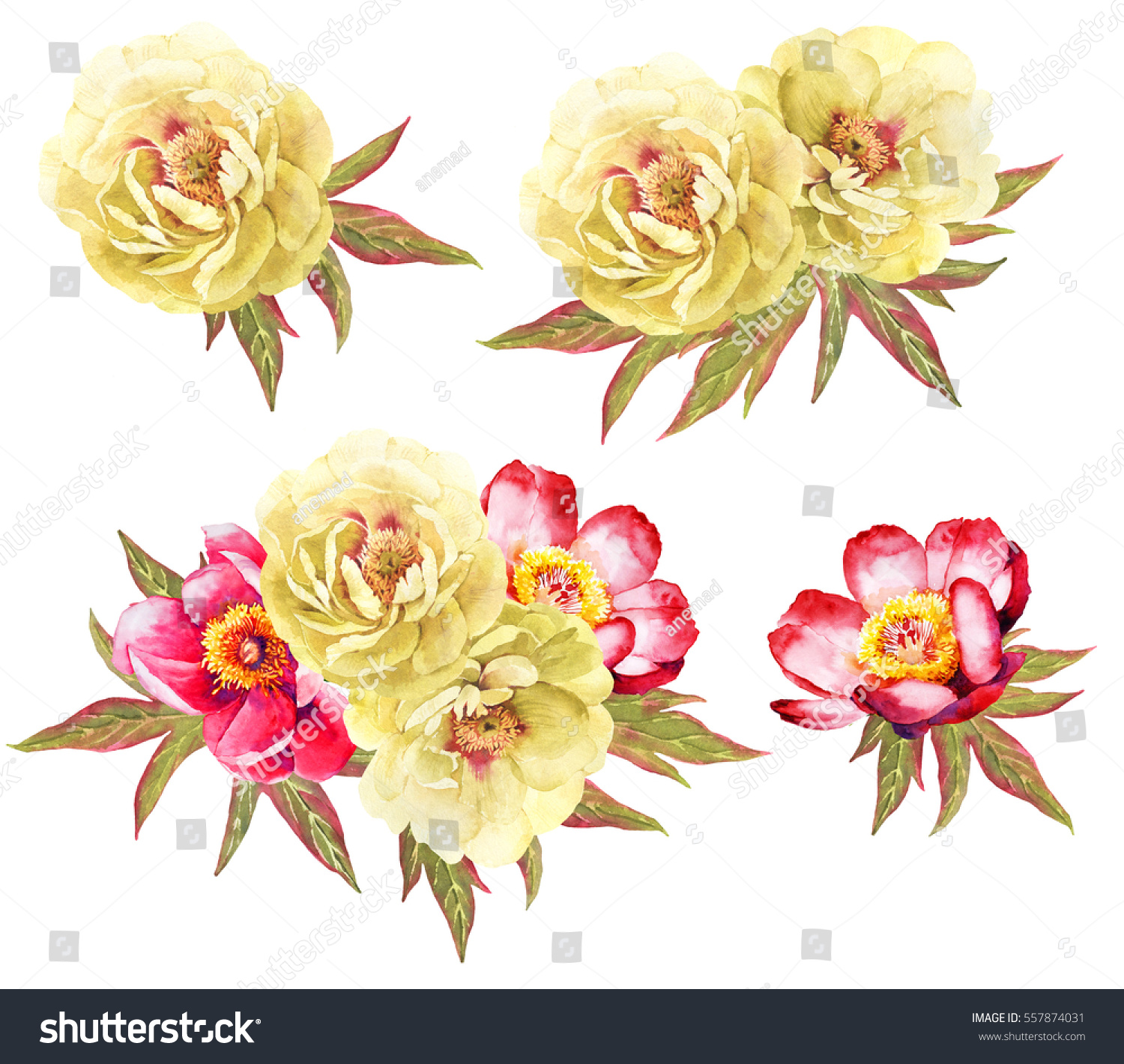Yellow Red Peonies Flower Watercolor Illustration Stock Illustration