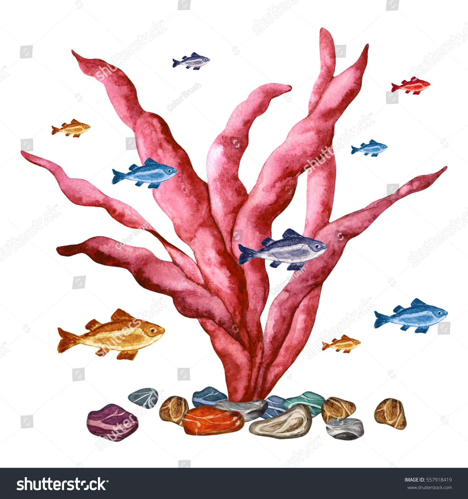 Watercolor Red Sea Weed Fishes Stones Stock Illustration 557918419 ...
