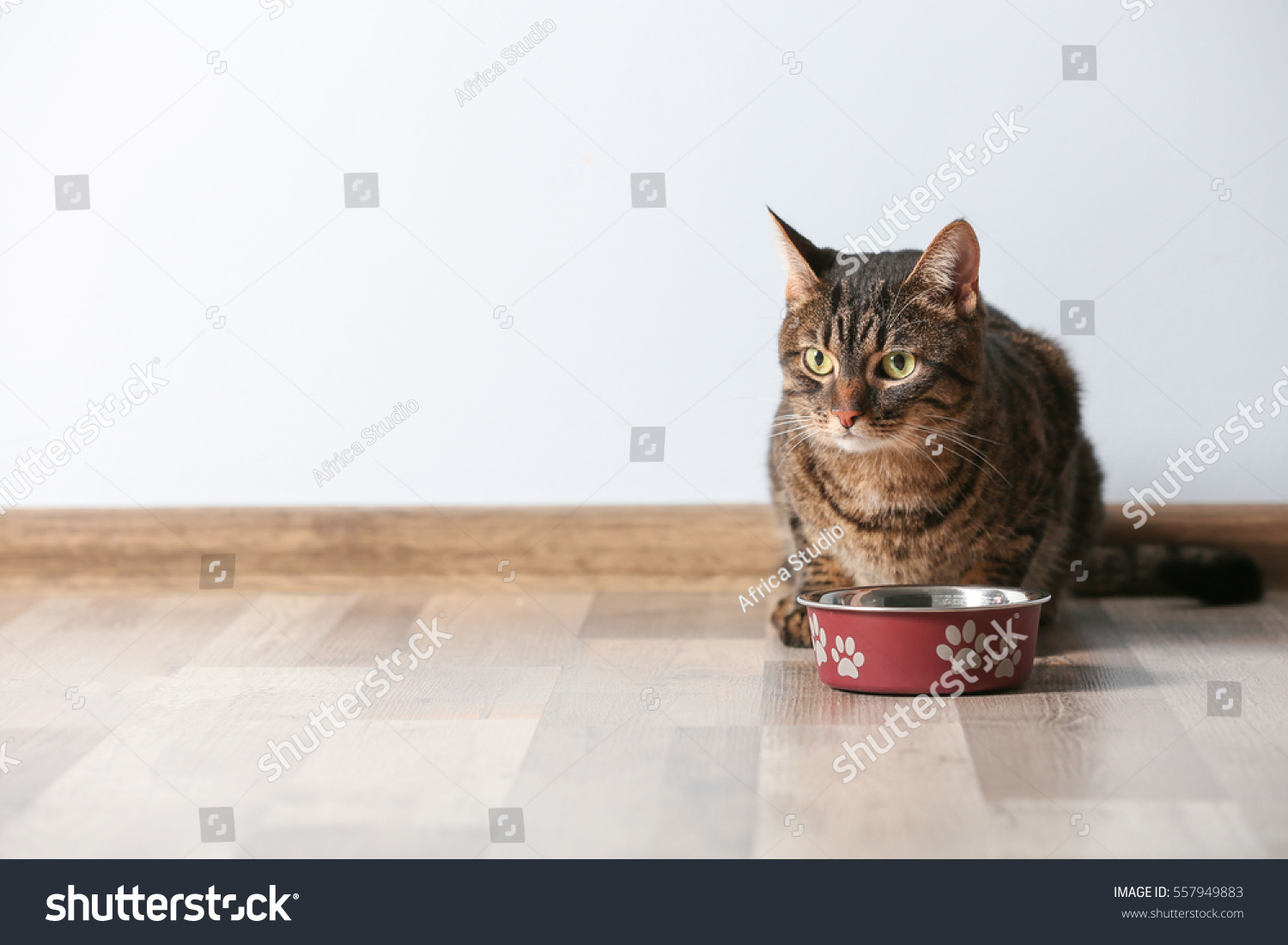 Cute Funny Cat Bowl Food Home Stock Shutterstock