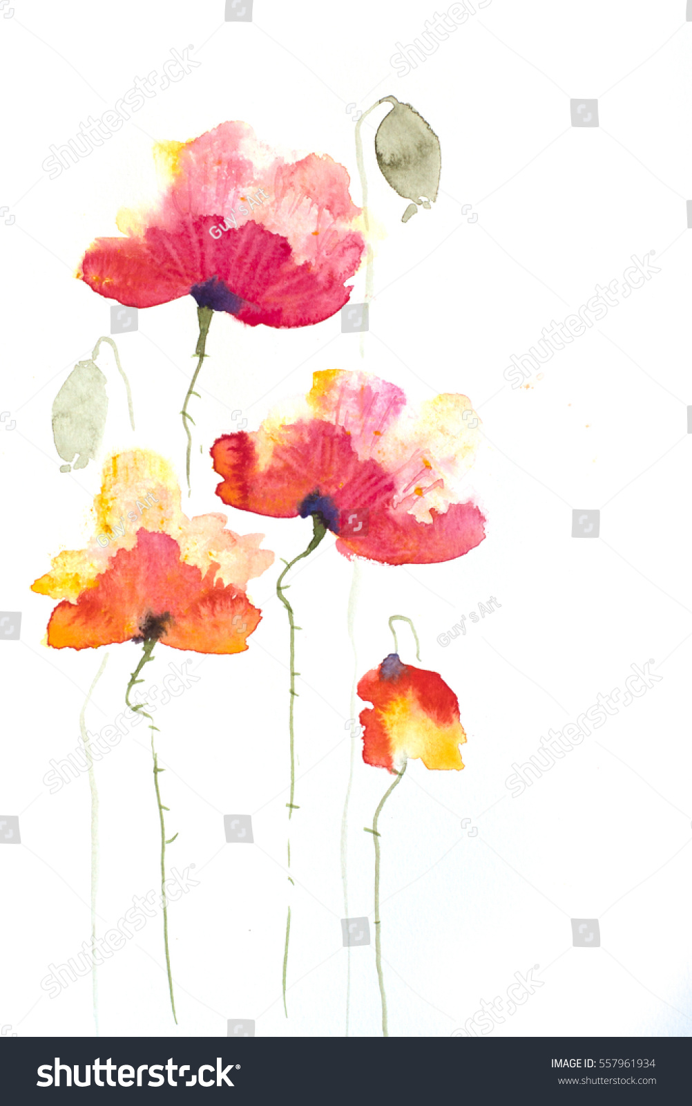 Red Poppy Flowers On White Hand Painted On Paper In Impressionism
