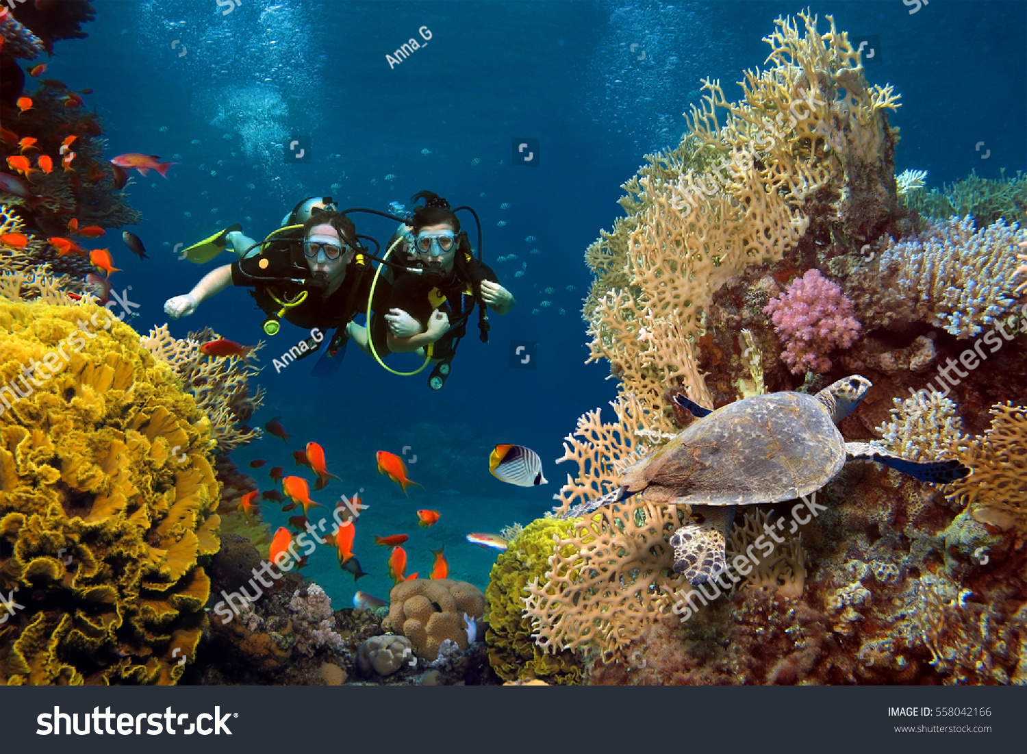 Loving Couple Dives Among Corals Fishes Stok Fotografi 558042166