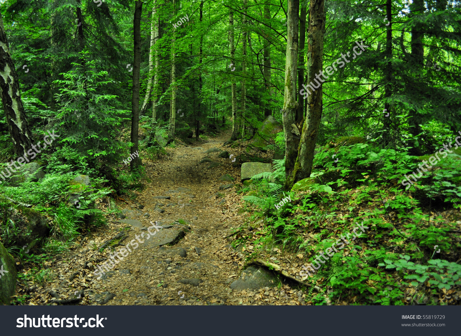 Nice Path Through Green Forest Stock Photo 55819729