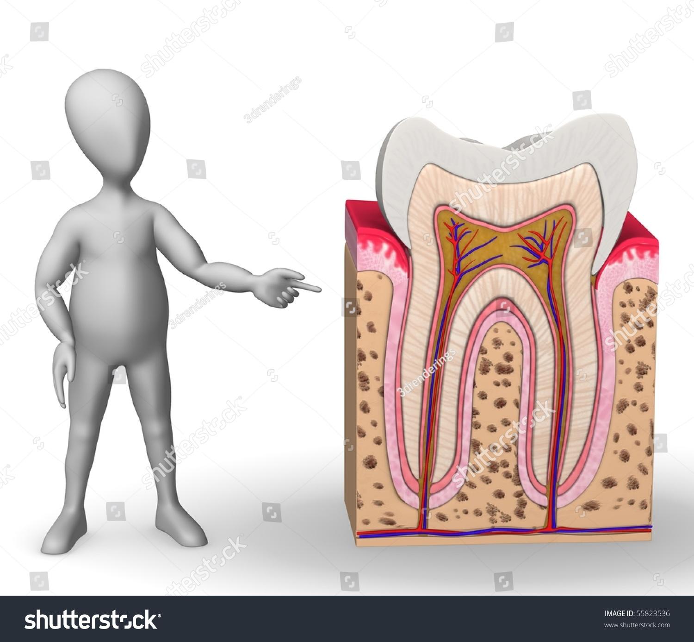 3 D Render Cartoon Character Teeth Anatomy Stock Illustration