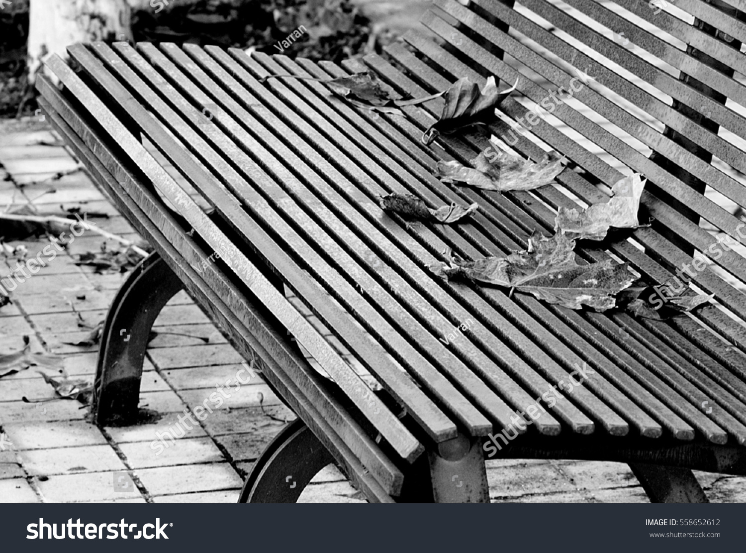 Nice black and white photo of a bench with autumn leaves
