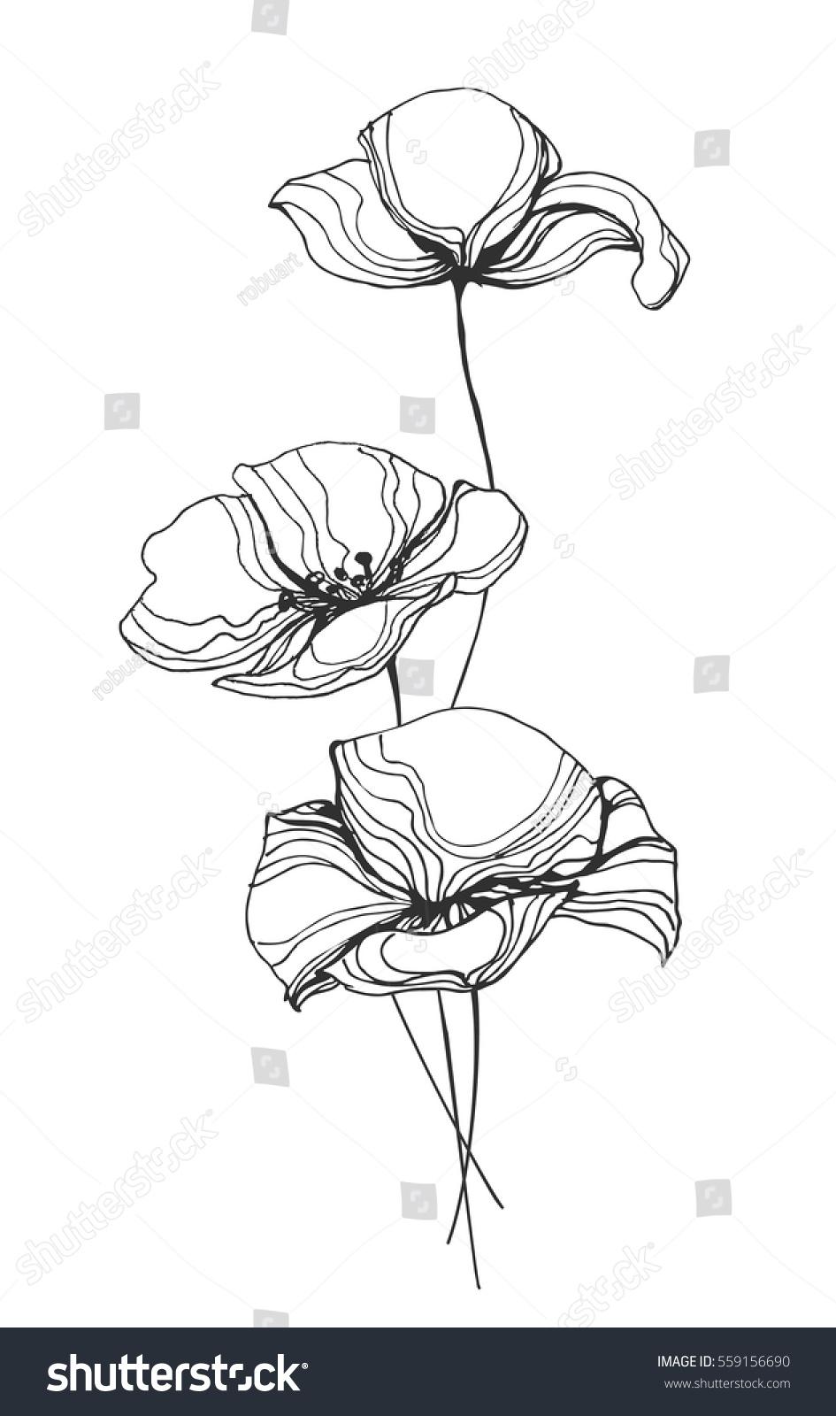Line Art Flower Illustration : Field poppy flowers line art vector stock