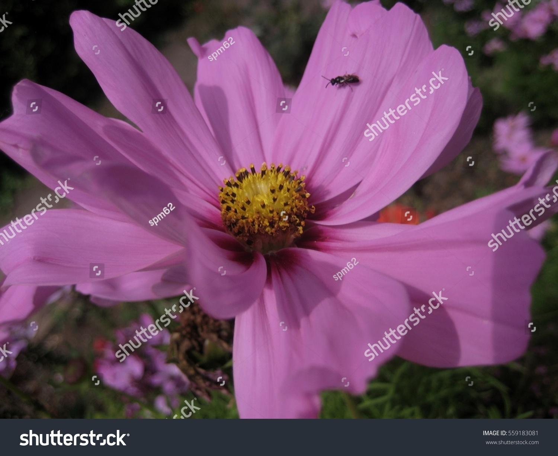 Lavender clematis flowers ez canvas izmirmasajfo