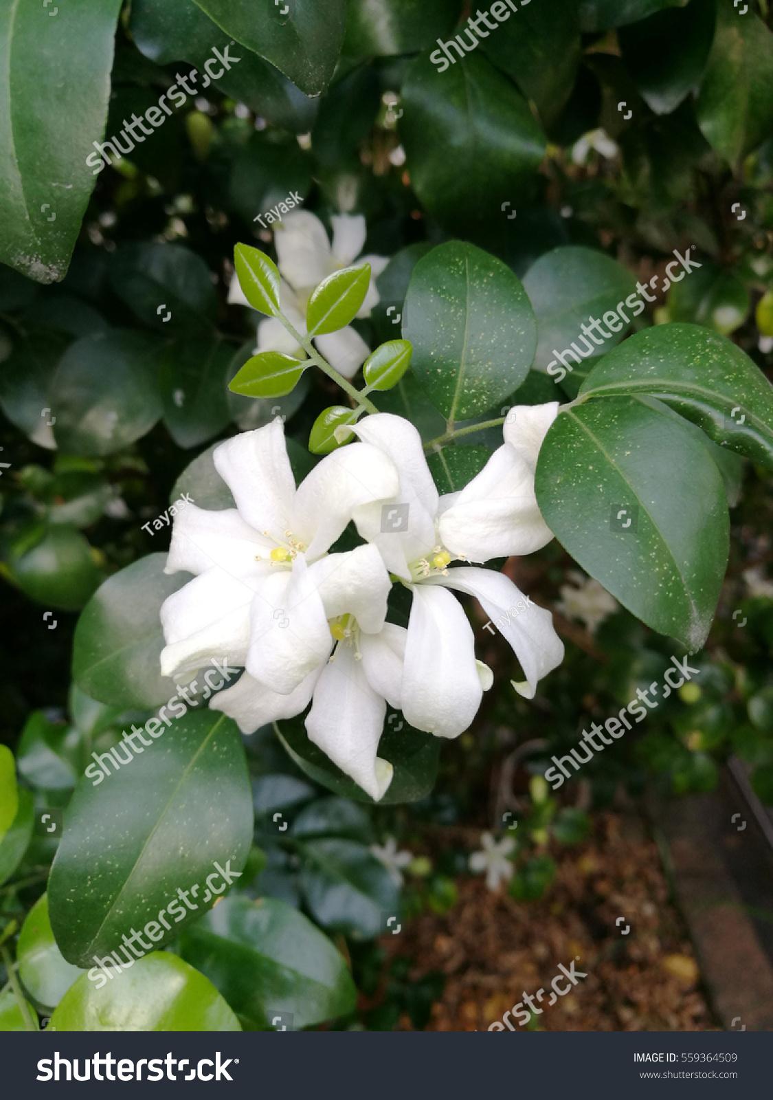 Flower In Garden Ez Canvas