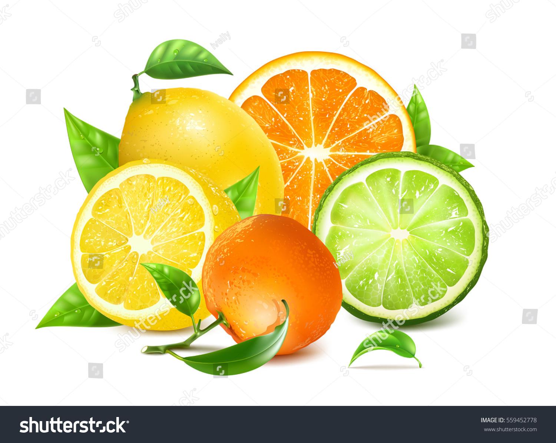 fresh citrus leaves orange lemons another のベクター画像素材